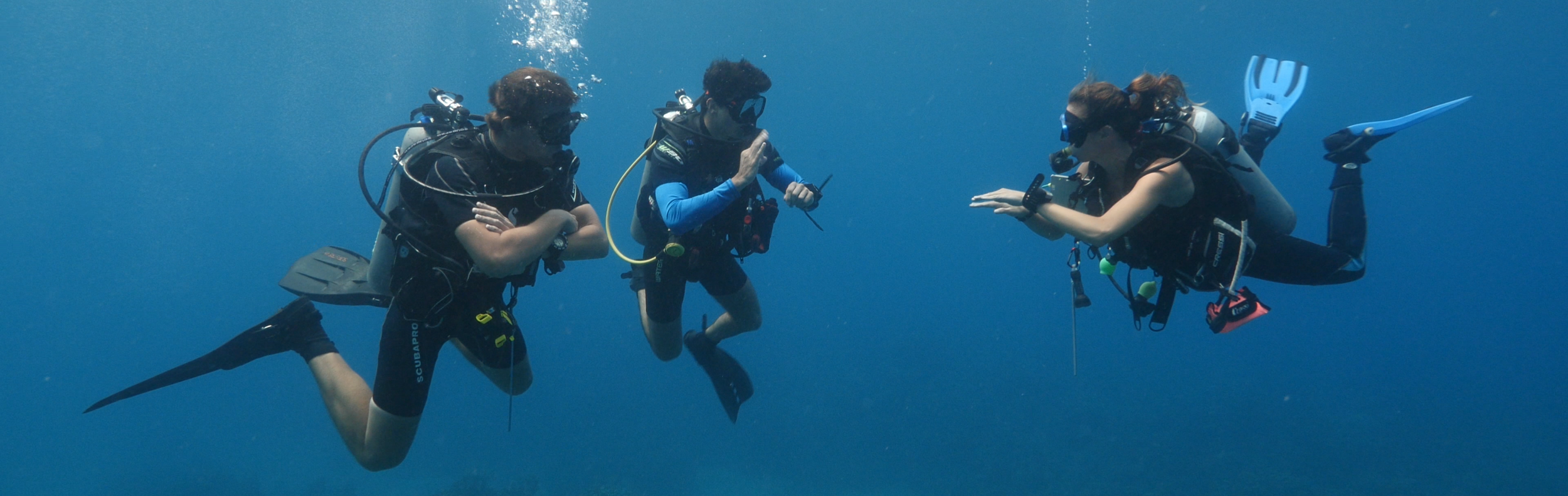 roatan divers divemaster program west end