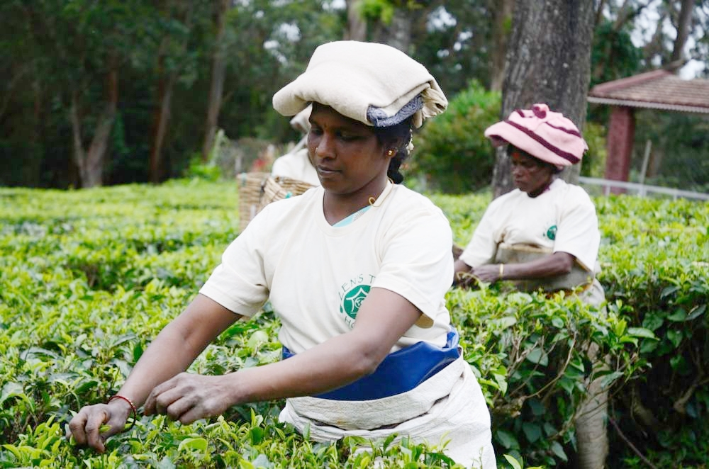 Helping people through the power of tea -