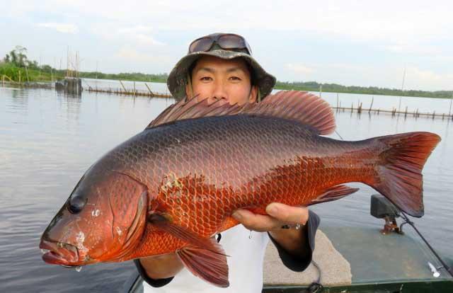 Mangrove Jack spoon lure casting Bolgoda Lake Sportfishing Lanka