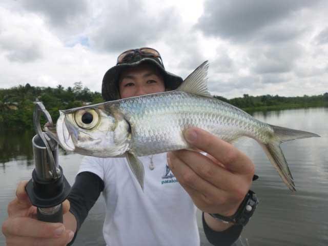 Oxeye Tarpon luring casting fishing Bolgoda Lake Sportfishing Lanka