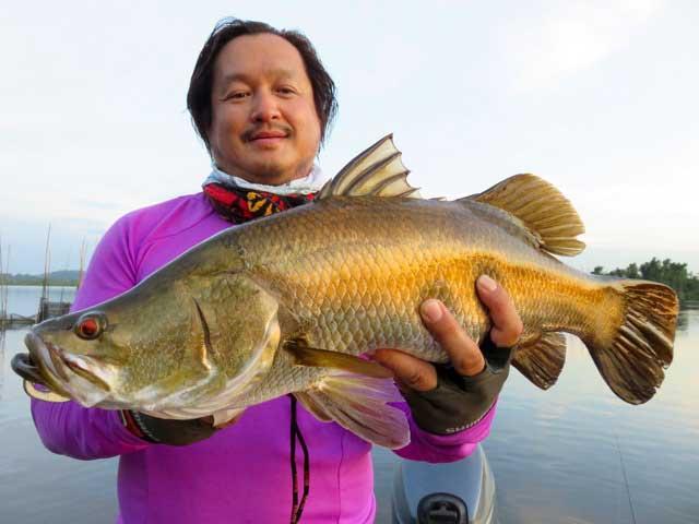 Wild Golden Barramundi luring casting fishing Bolgoda Lake Sportfishing Lanka