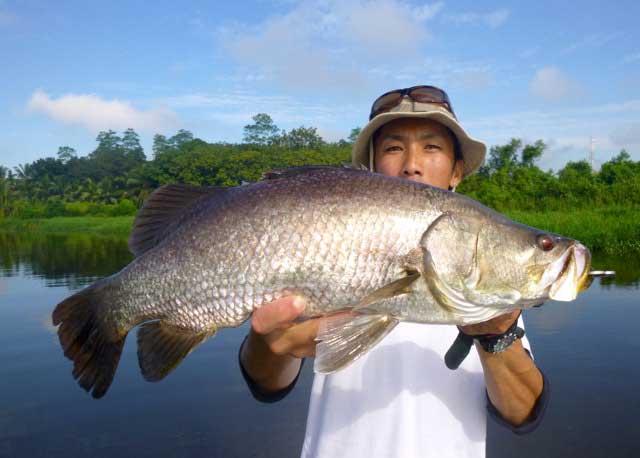 Wild Barramundi casting lure fishing Bolgoda Lake Sportfishing Lanka