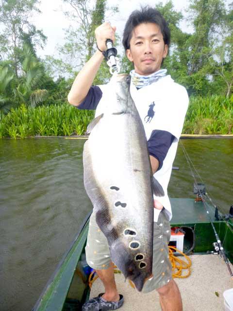 Featherback finesse fishing soft plastic bait bologna lake Sportfishing Lanka