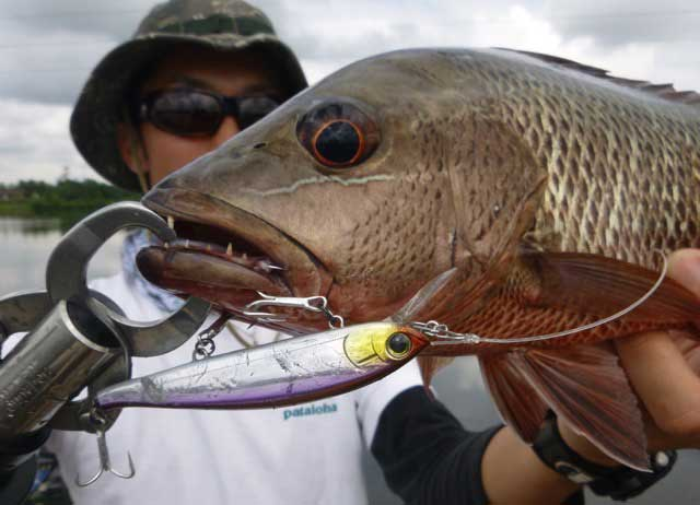 duel-hardcore-flat-minnow-was-the-lure-of-the-trip.jpg