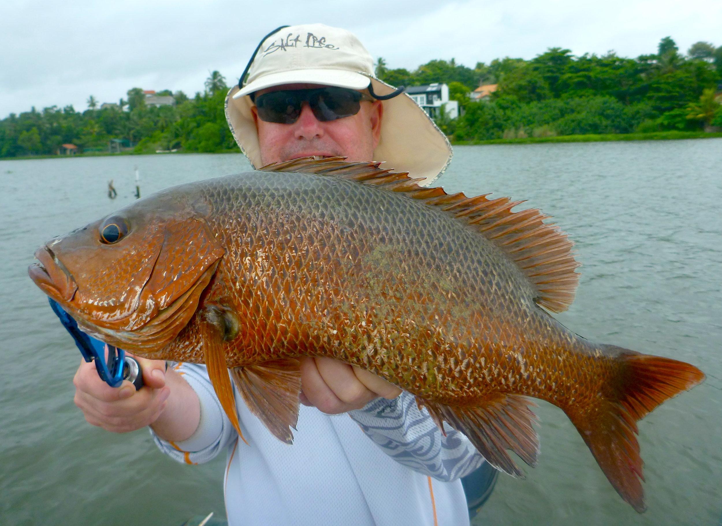 Sportfishing Lanka Mangrove Jack Bolgoda Lake