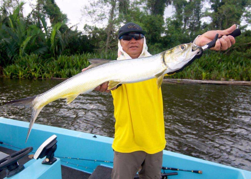 Sport Fishing Sri Lanka Bolgoda Lake Ladyfish Giant herring