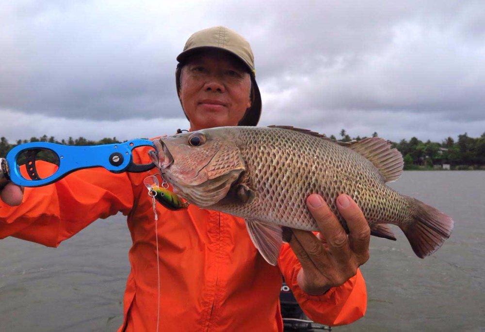 Sport Fishing Sri Lanka Bolgoda Lake Mangrove Jack Rapala