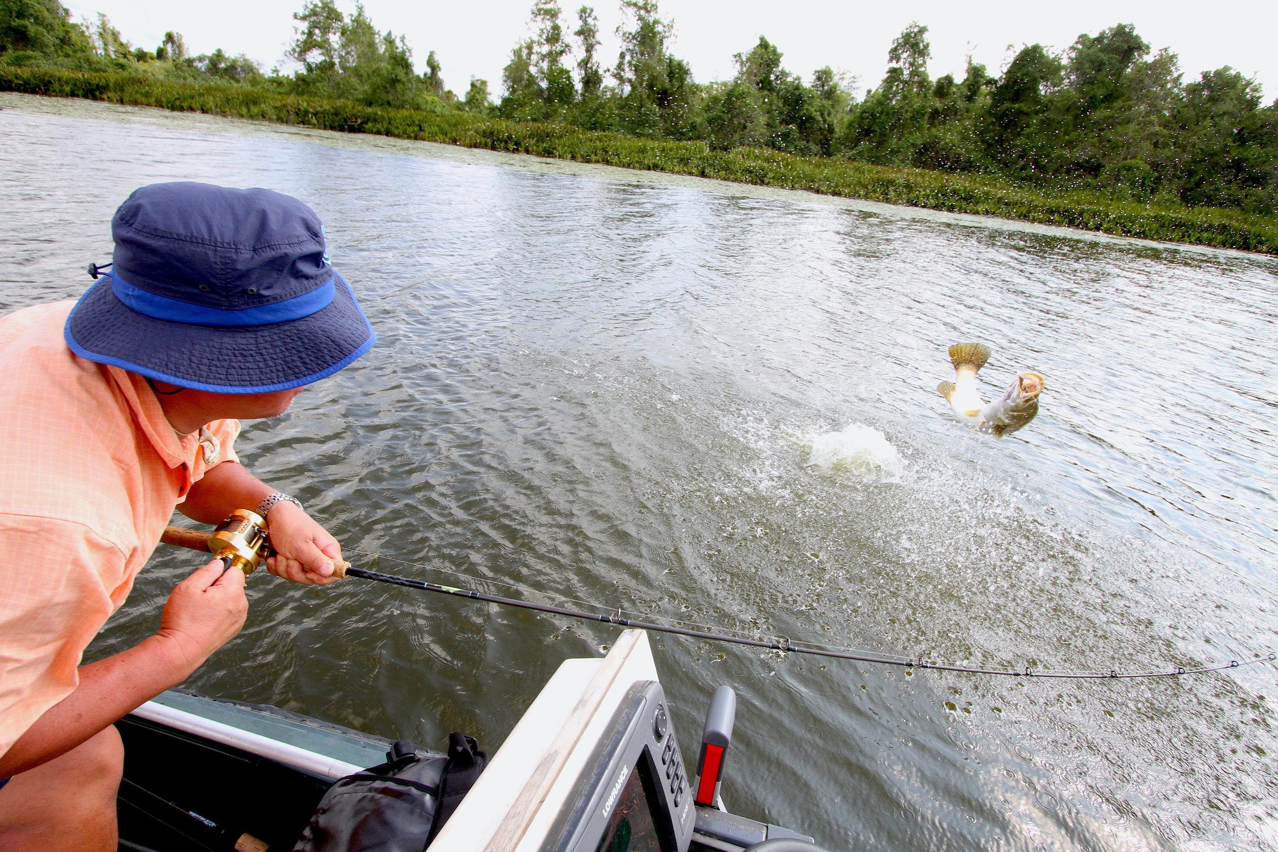 Sport Fishing Sri Lanka Bolgoda lake Sportfishing Lanka Barramundi jump