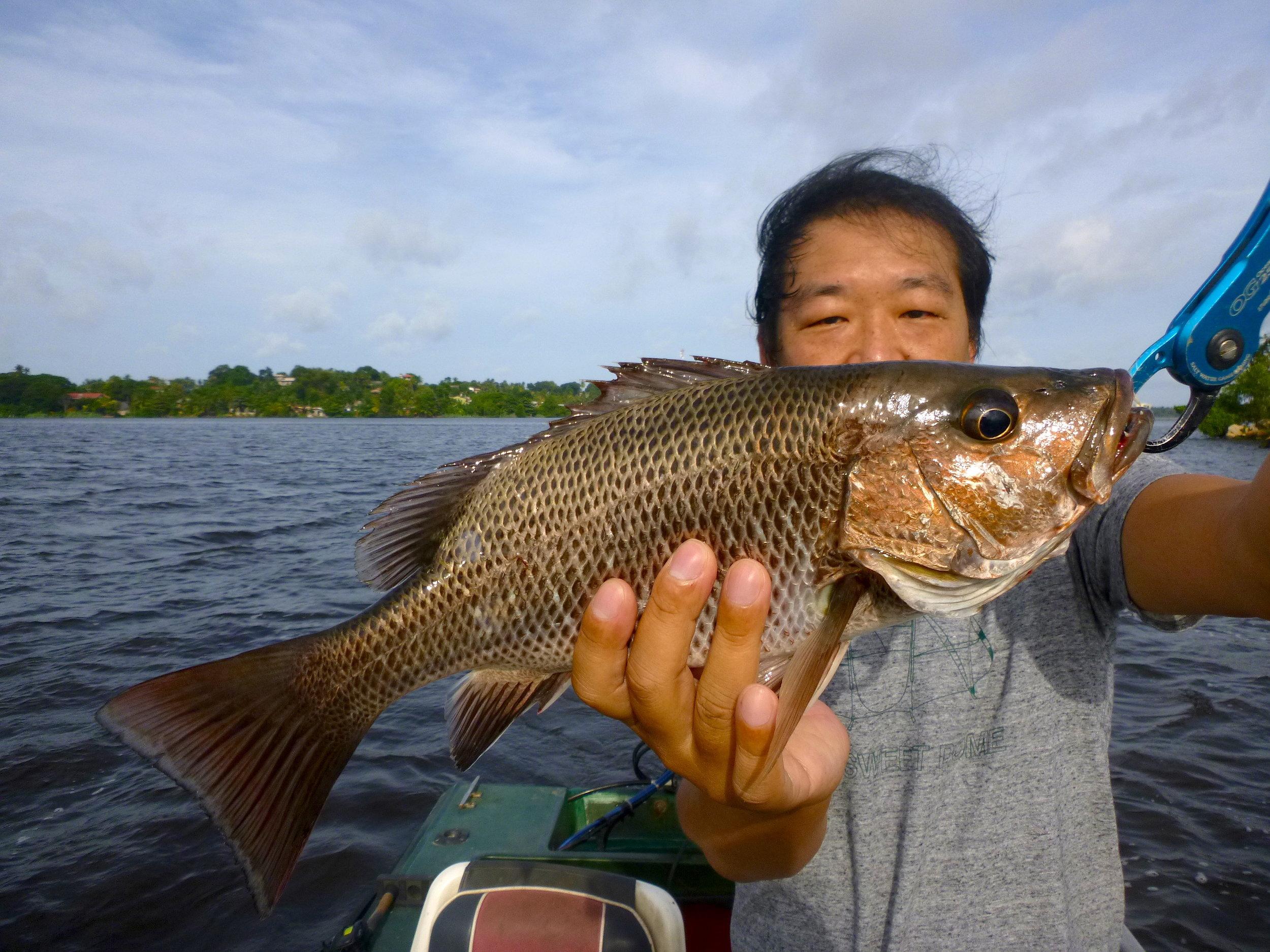 Sportfishing Lanka Mangrove Jack 2 fishing at Bolgoda Lake.JPG