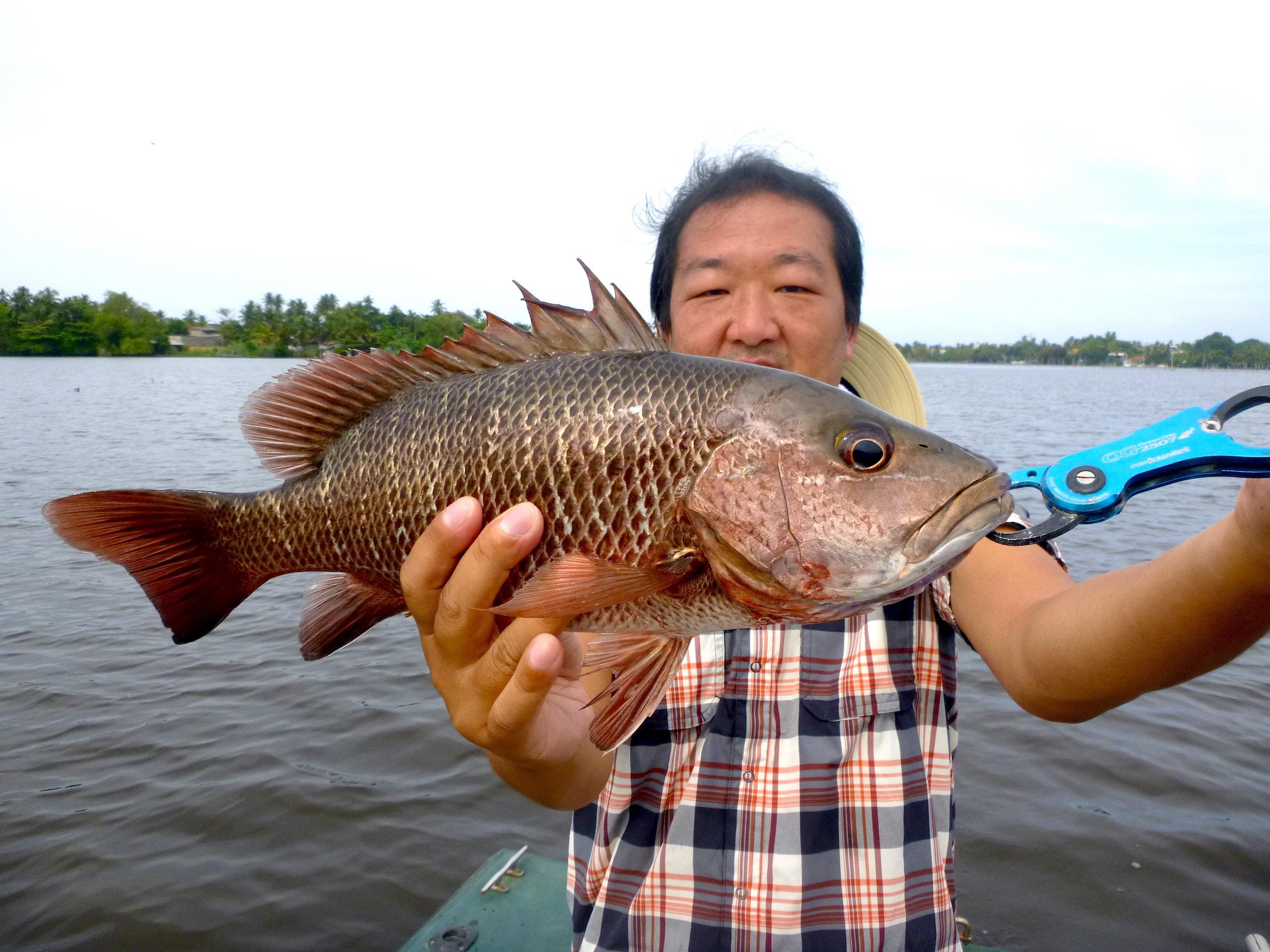 Sportfishing Lanka Mangrove Jack 3 Bolgoda Lake.JPG