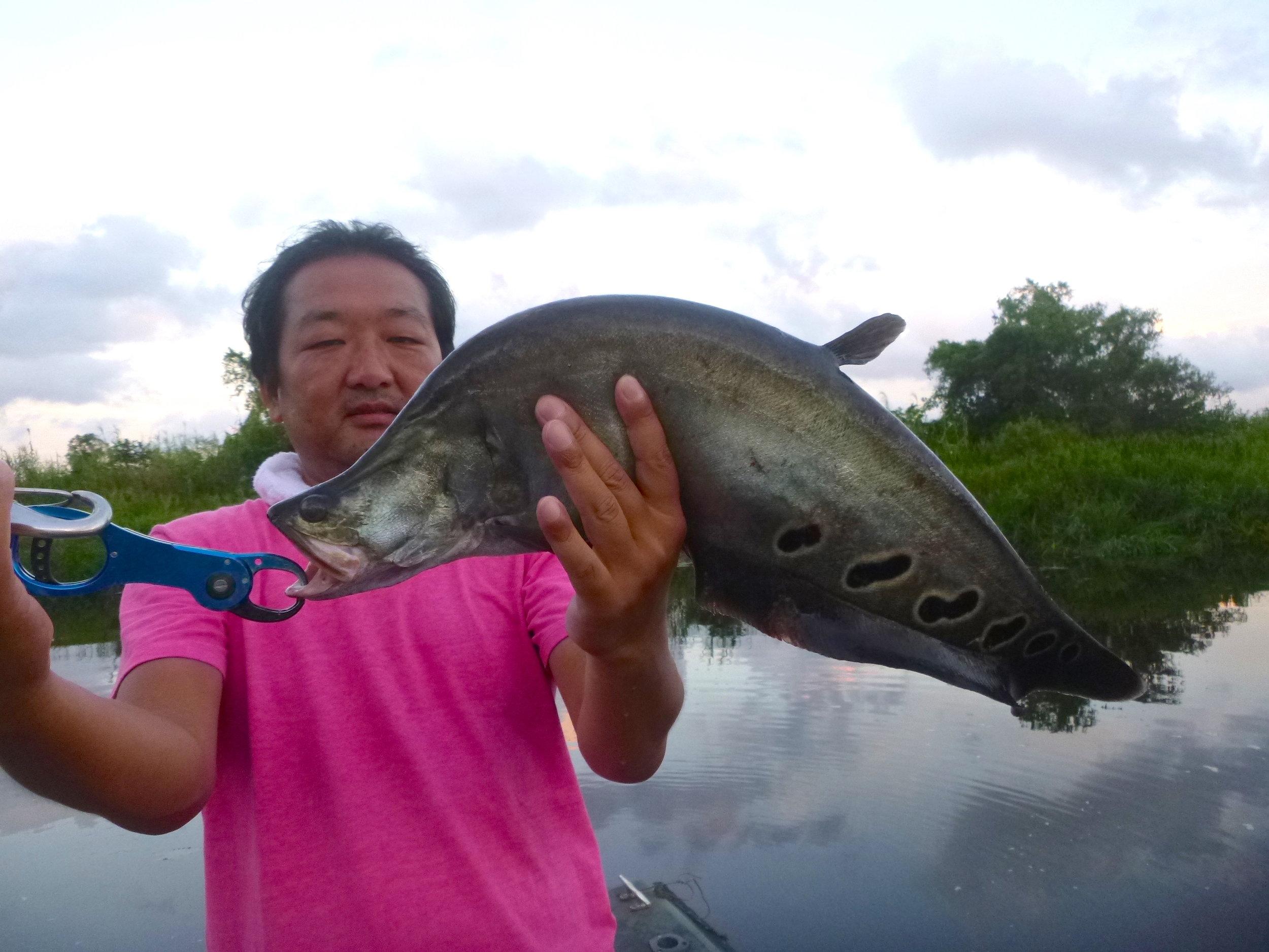 Sportfishing Lanka Featherback Knife fish fishing at Bolgoda Lake.JPG