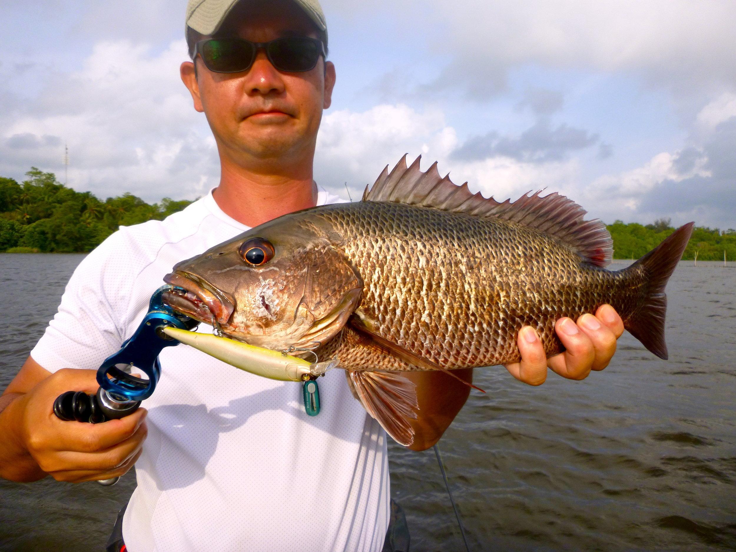 Sportfishing Lanka Mangrove Jack Fishing Bolgoda Lake Megabass.JPG