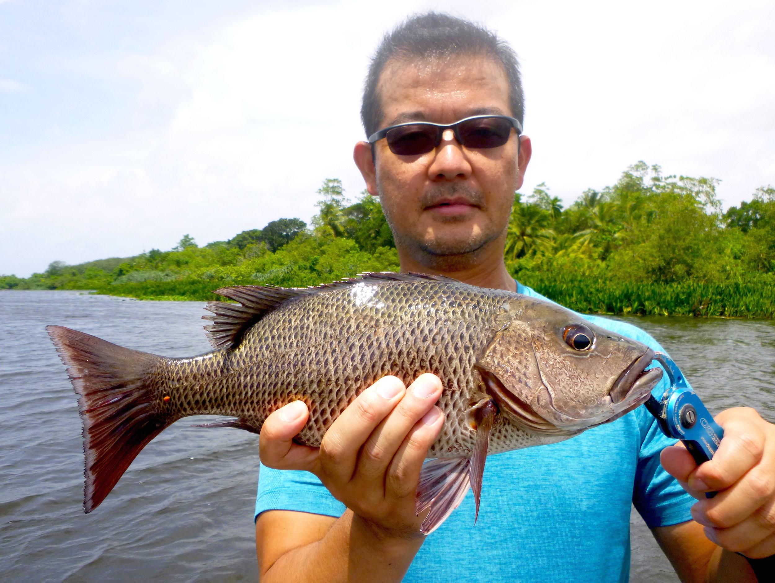 Sportfishing Lanka Bolgoda Lake Feisty Mangrove Jack .JPG