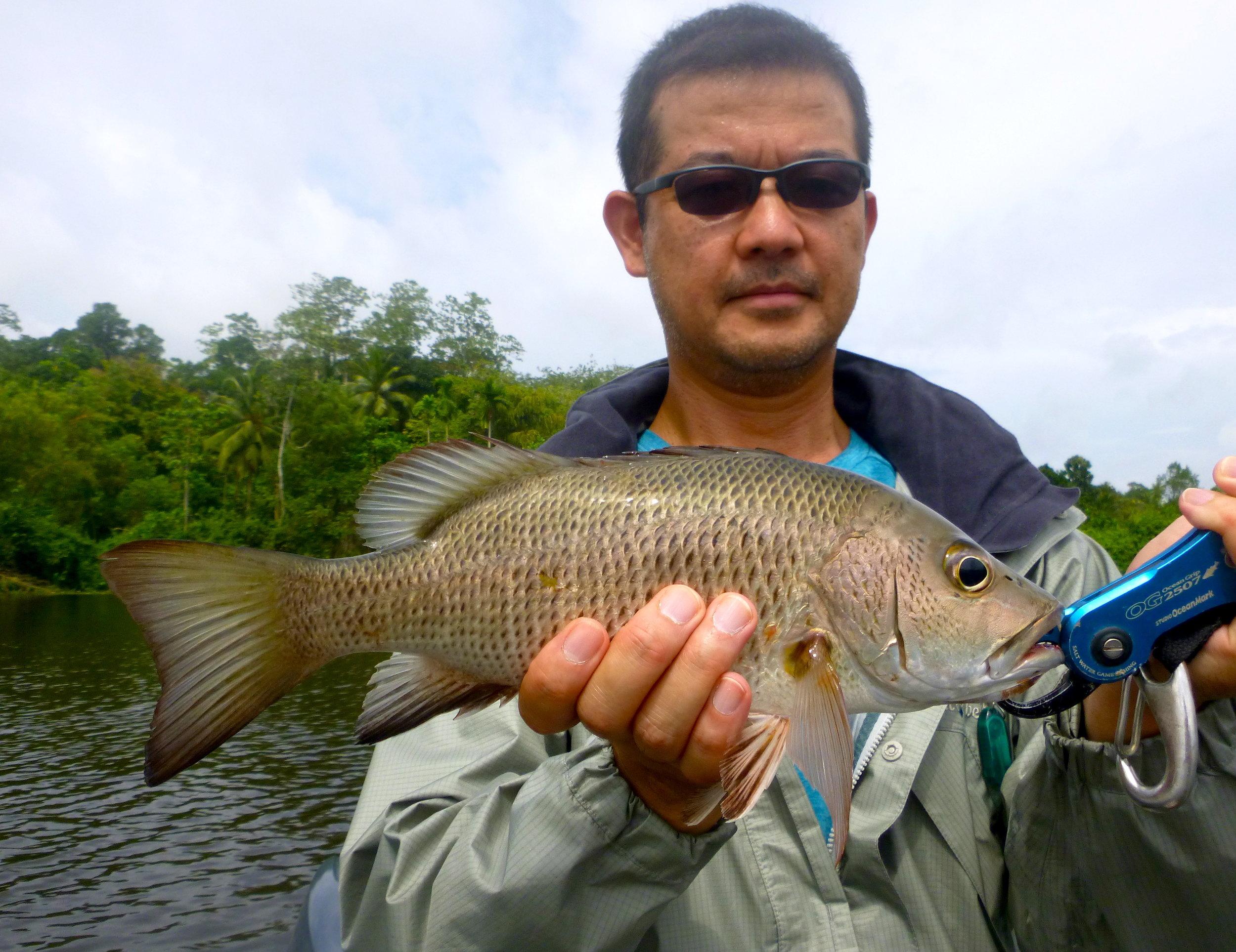 Sportfishing Lanka Luring Mangrove Jack Fishing at Bolgoda Lake.JPG