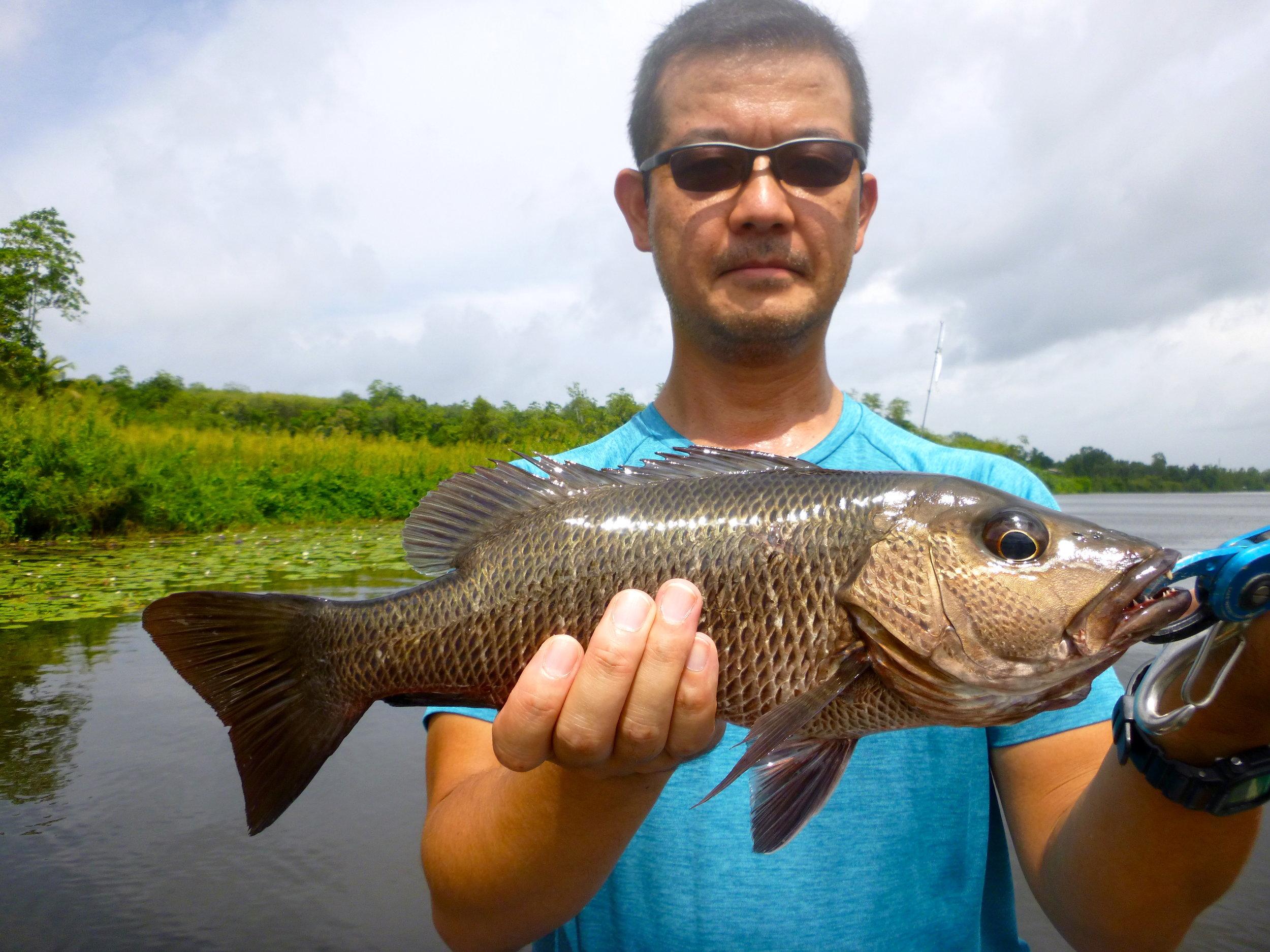 Sportfishing Lanka Mangrove Jack Bolgoda Lake .JPG
