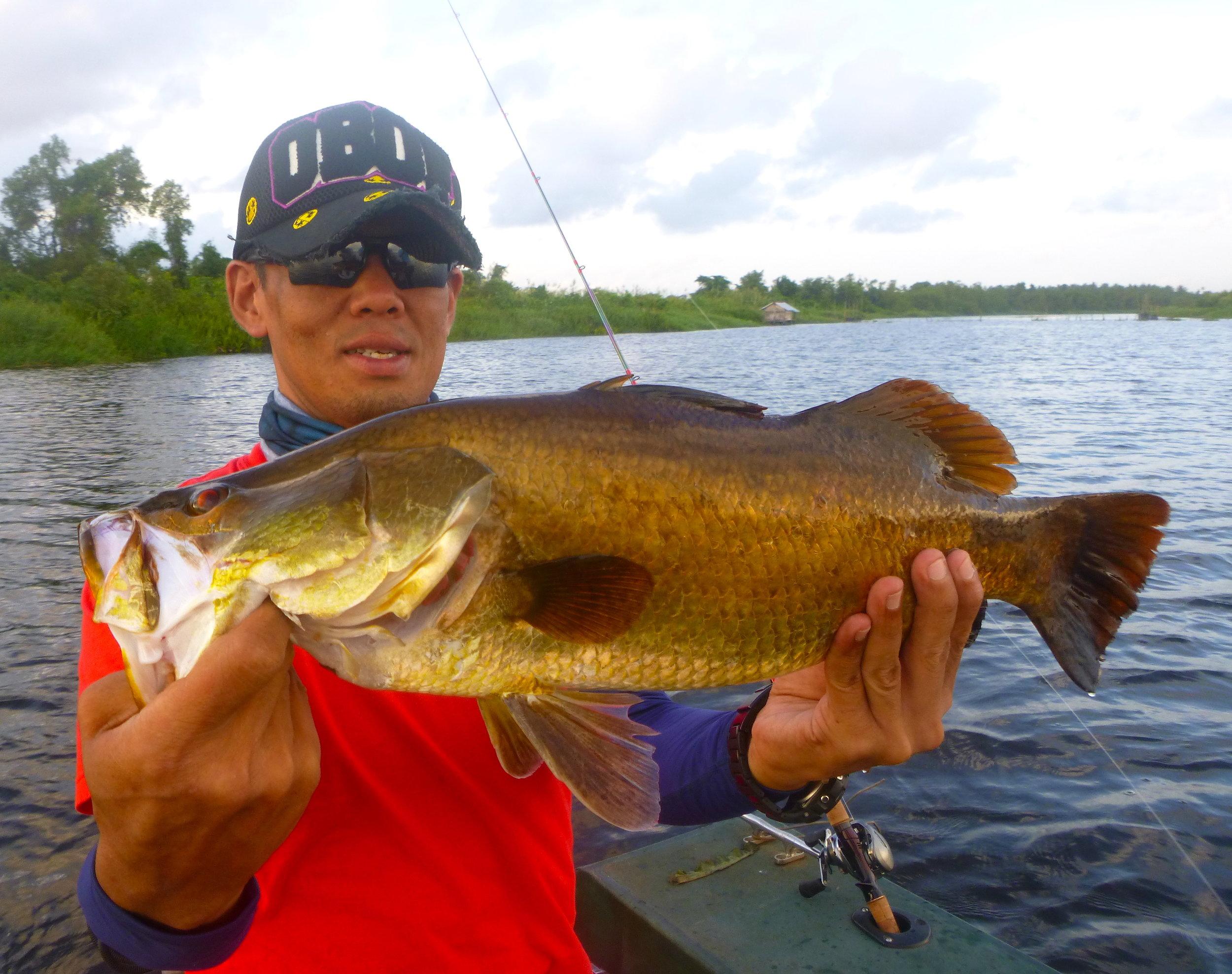 Wild Golden Barramundi Bolgoda Lake Sportfishing Lanka.JPG