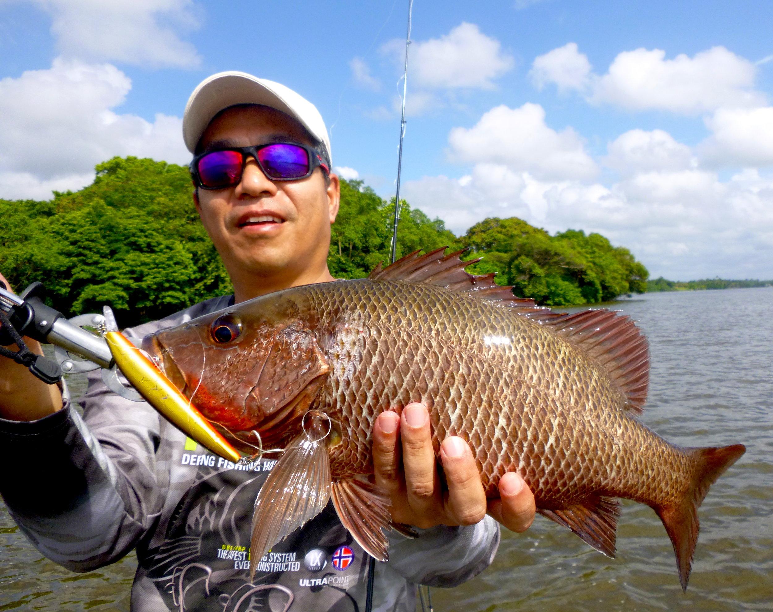 Mangrove Jack Bolgoda Lake Sportfishing Lanka.JPG