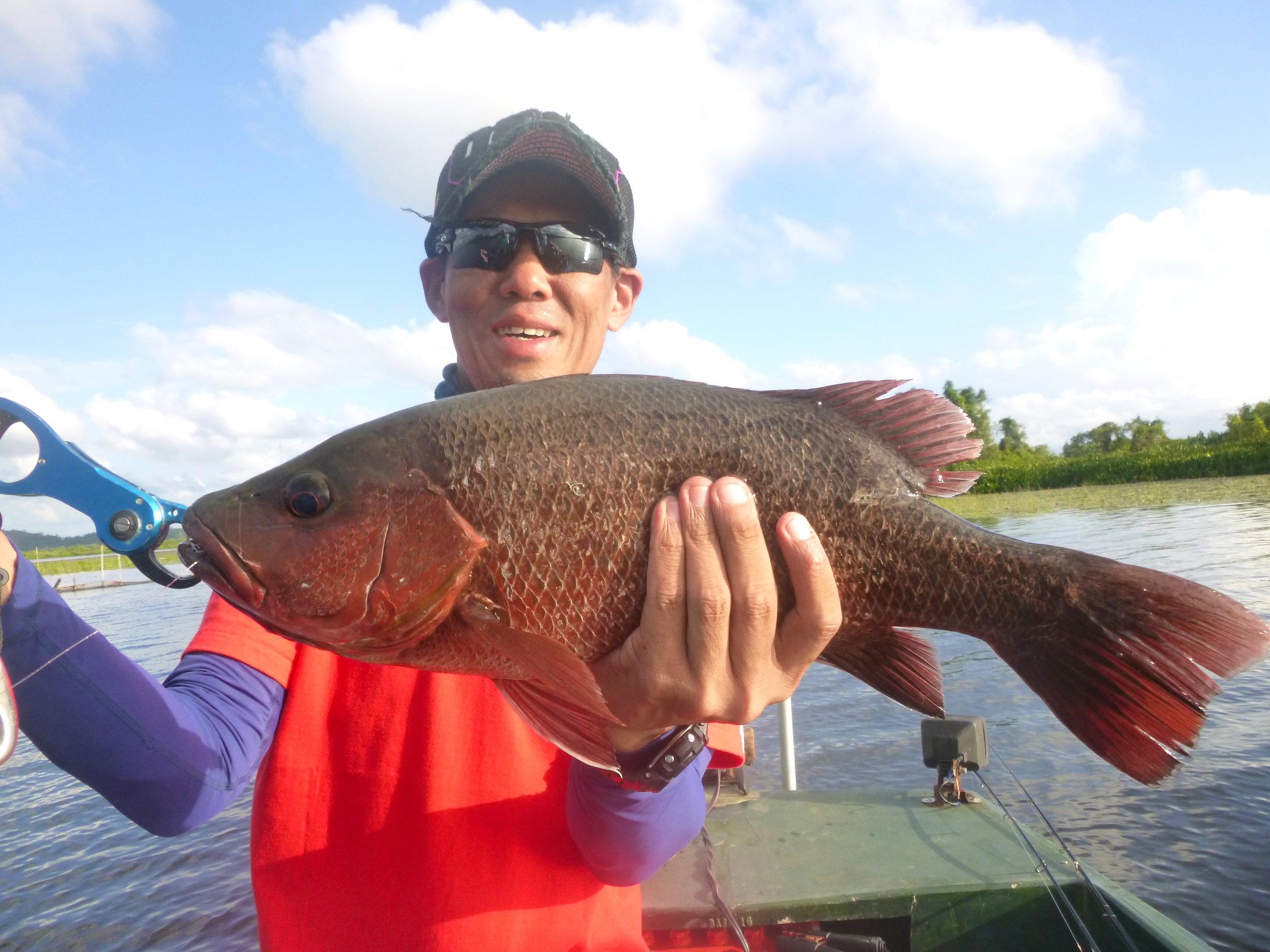 Sportfishing Lanka Bolgoda Lake Fishing Mangrove Jack 2.JPG