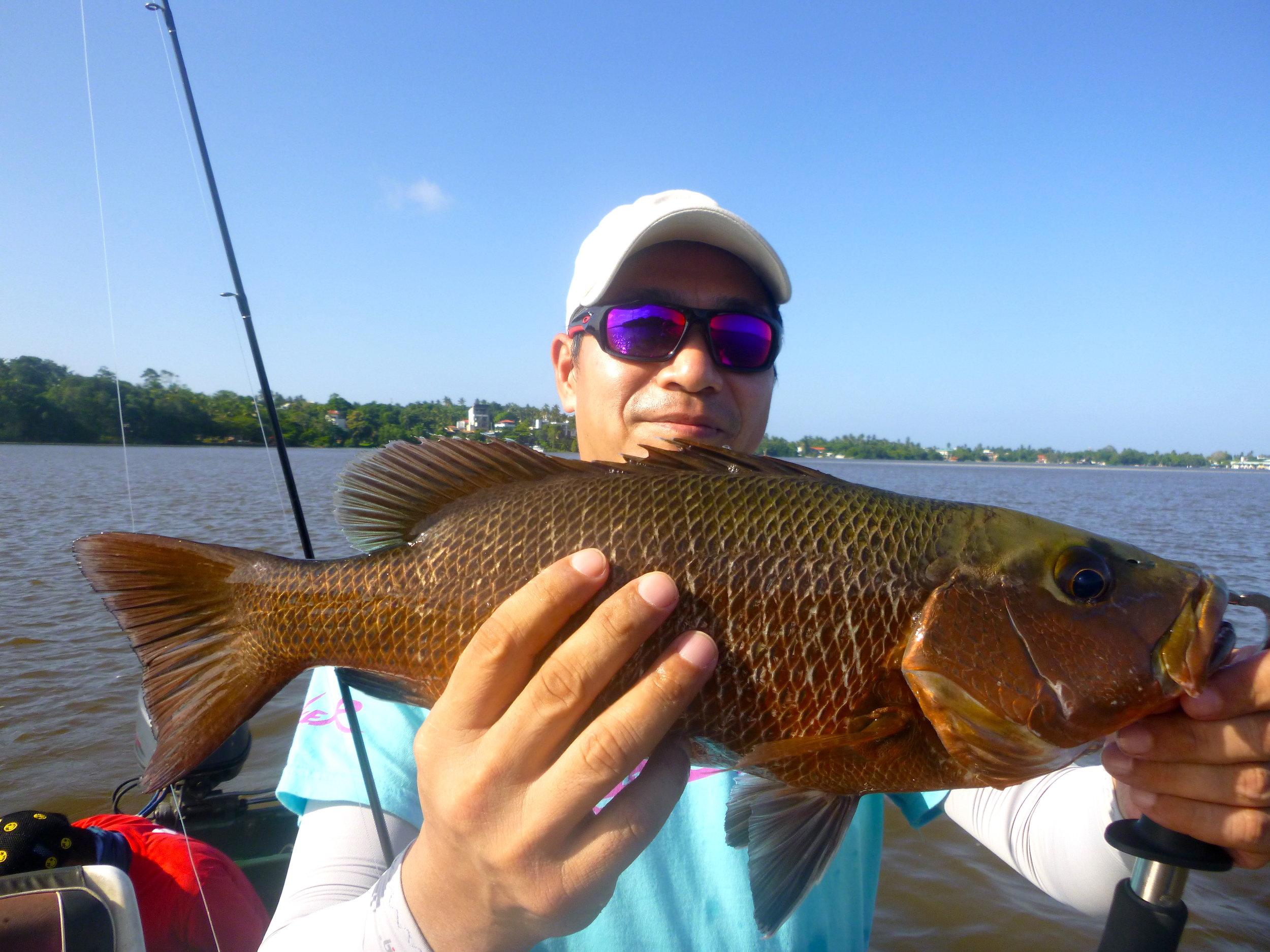 Fishing Bolgoda Lake Sportfishing Lanka Mangrove Jack.JPG