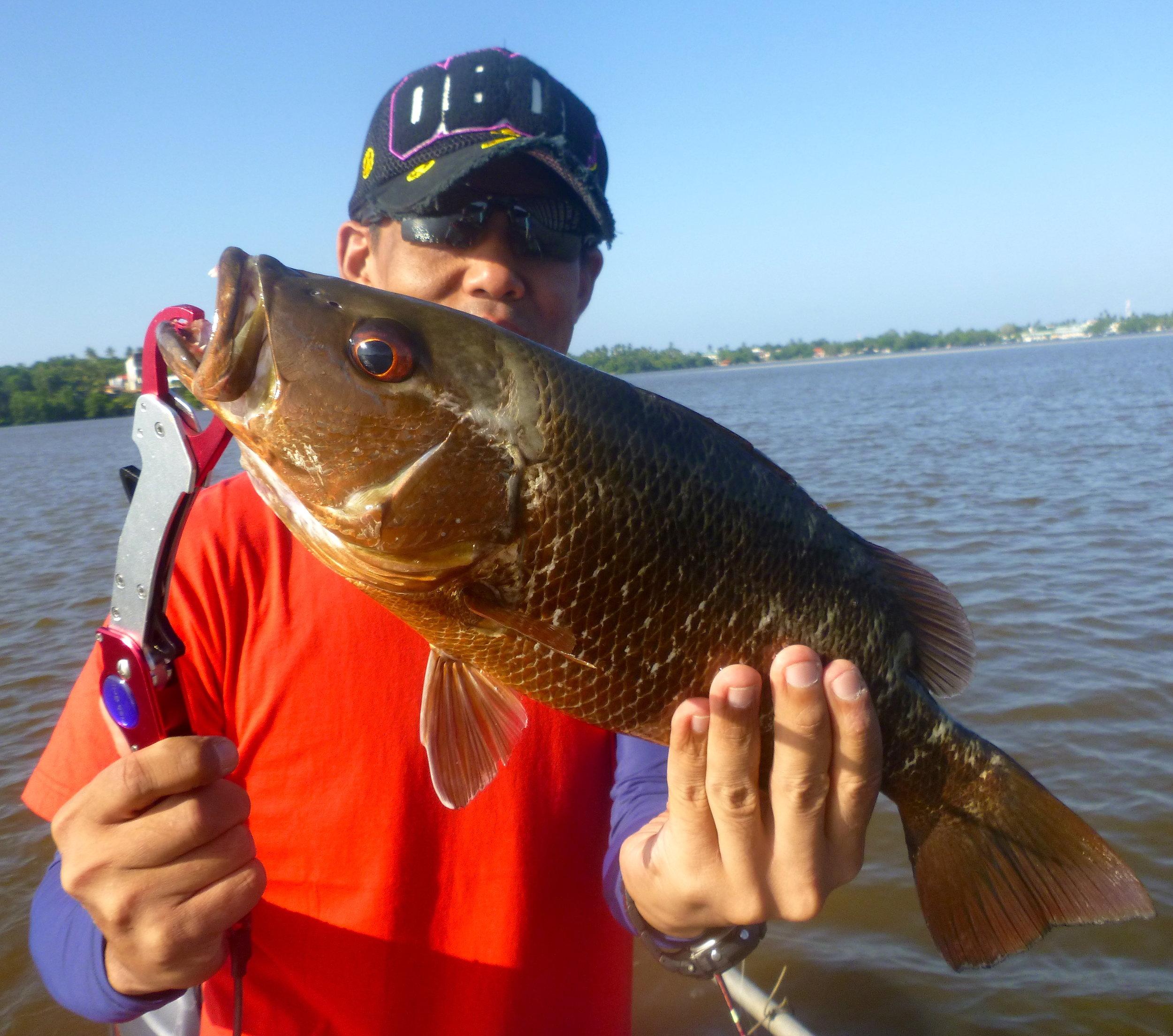 Sportfishing Lanka Bolgoda Lake fishing mangrove jack.JPG
