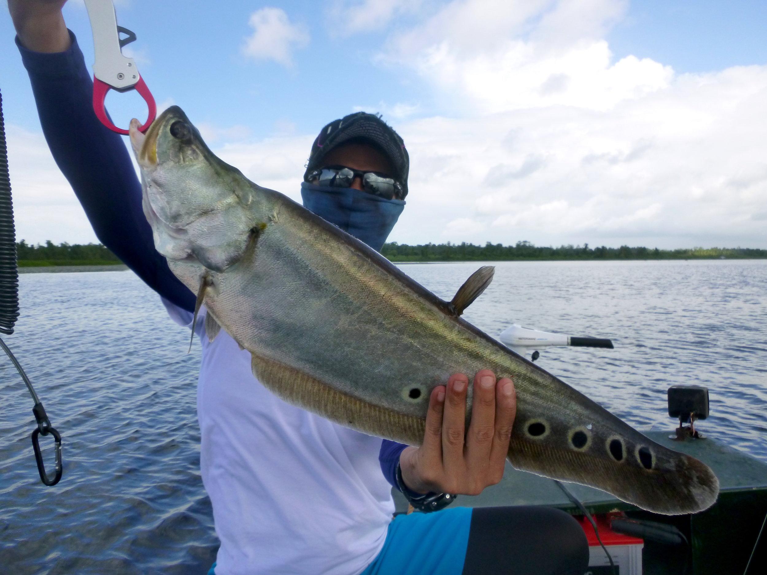 Sportfishing Lanka Fetaherback Bolgoda Lake fishing.JPG