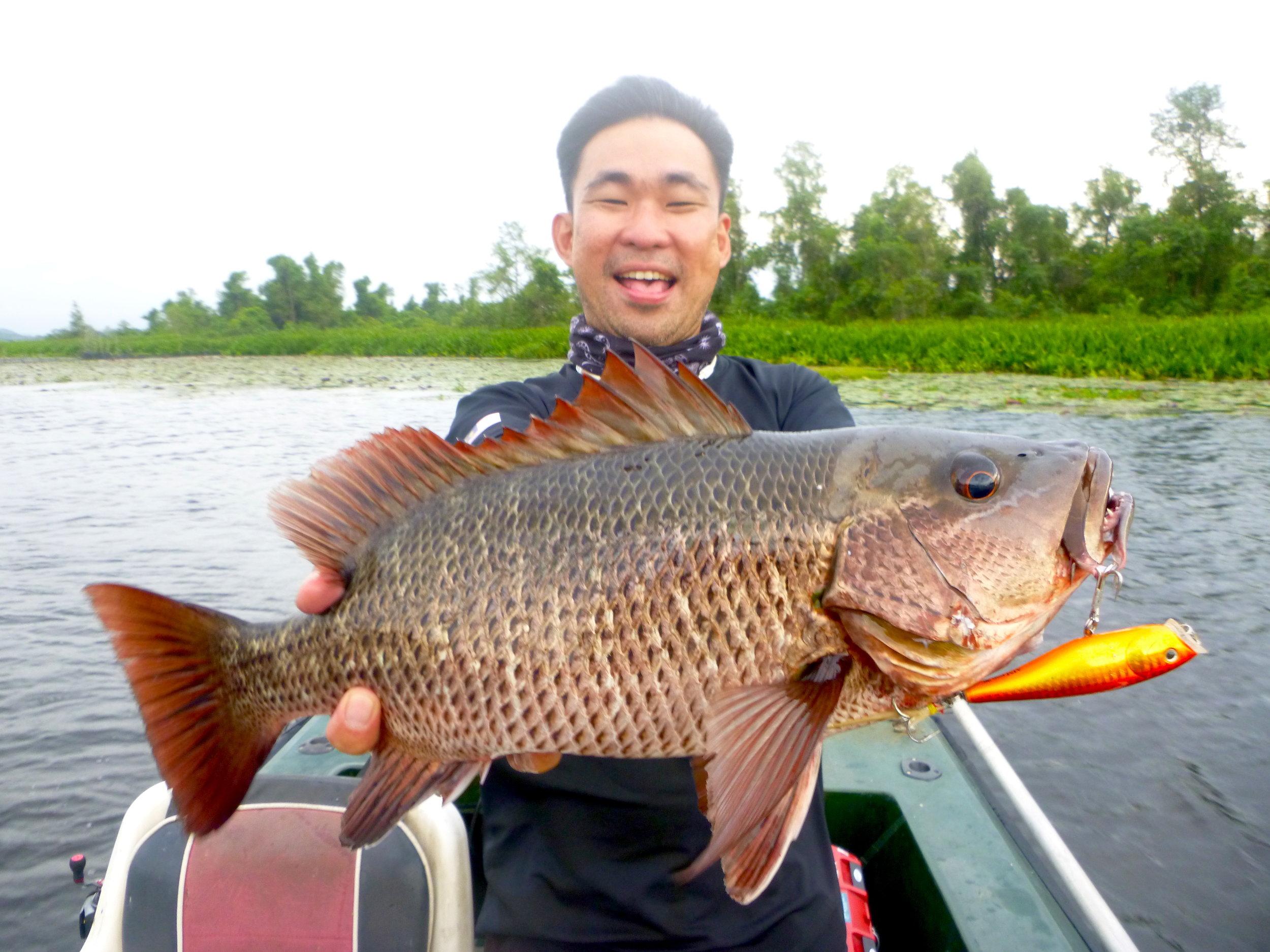 Mangrove Jack Popper Bolgoda Lake Sportfishing Lanka.JPG