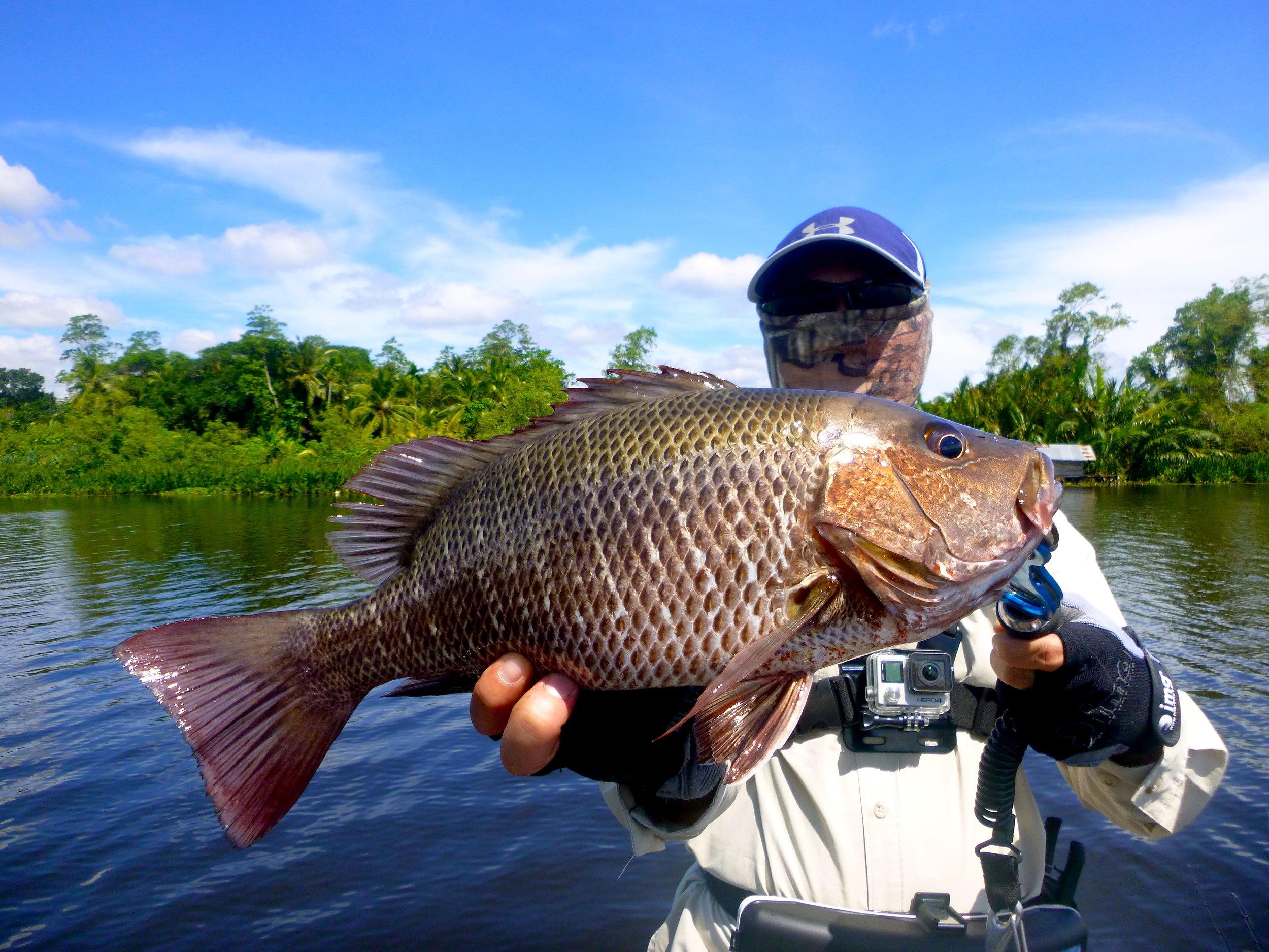 Bolgoda Lake Fishing Mangrove Jack Sportfishing Lanka.JPG