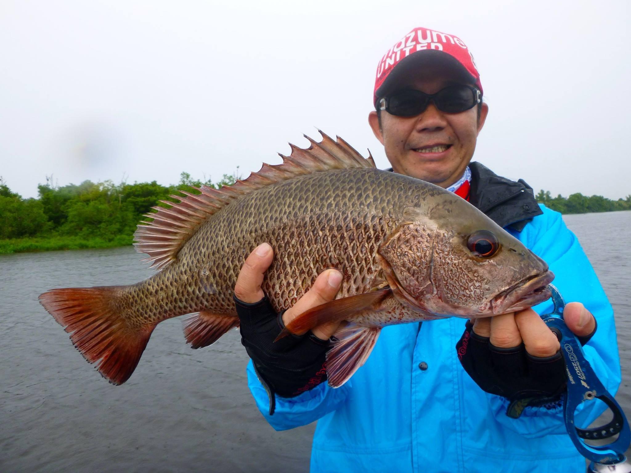 Fishing Sri Lanka Bolgoda Lake Mangrove Jack.jpg