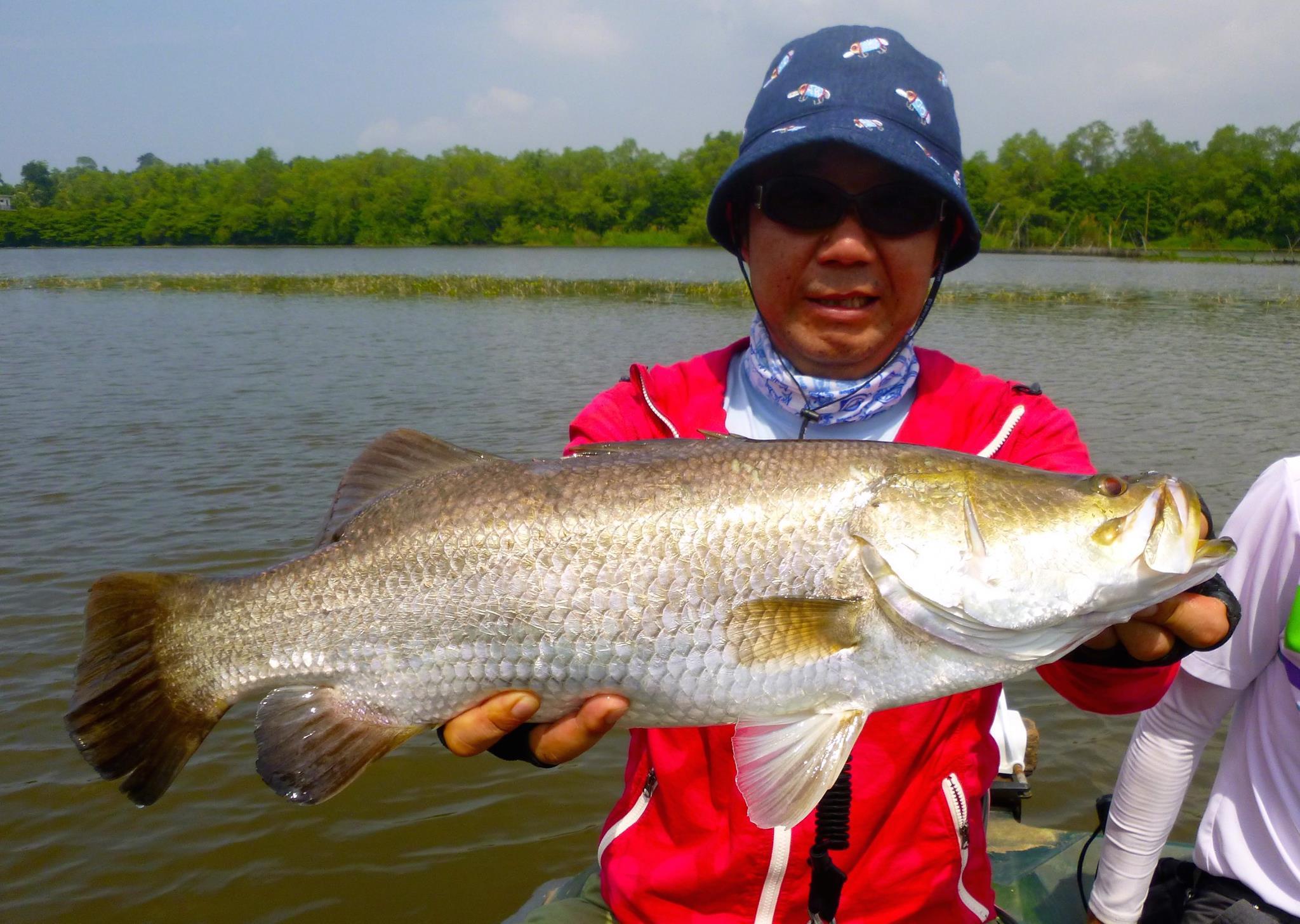 Golden Barramundi Bolgoda Lake Sri Lanka Fishing.jpg