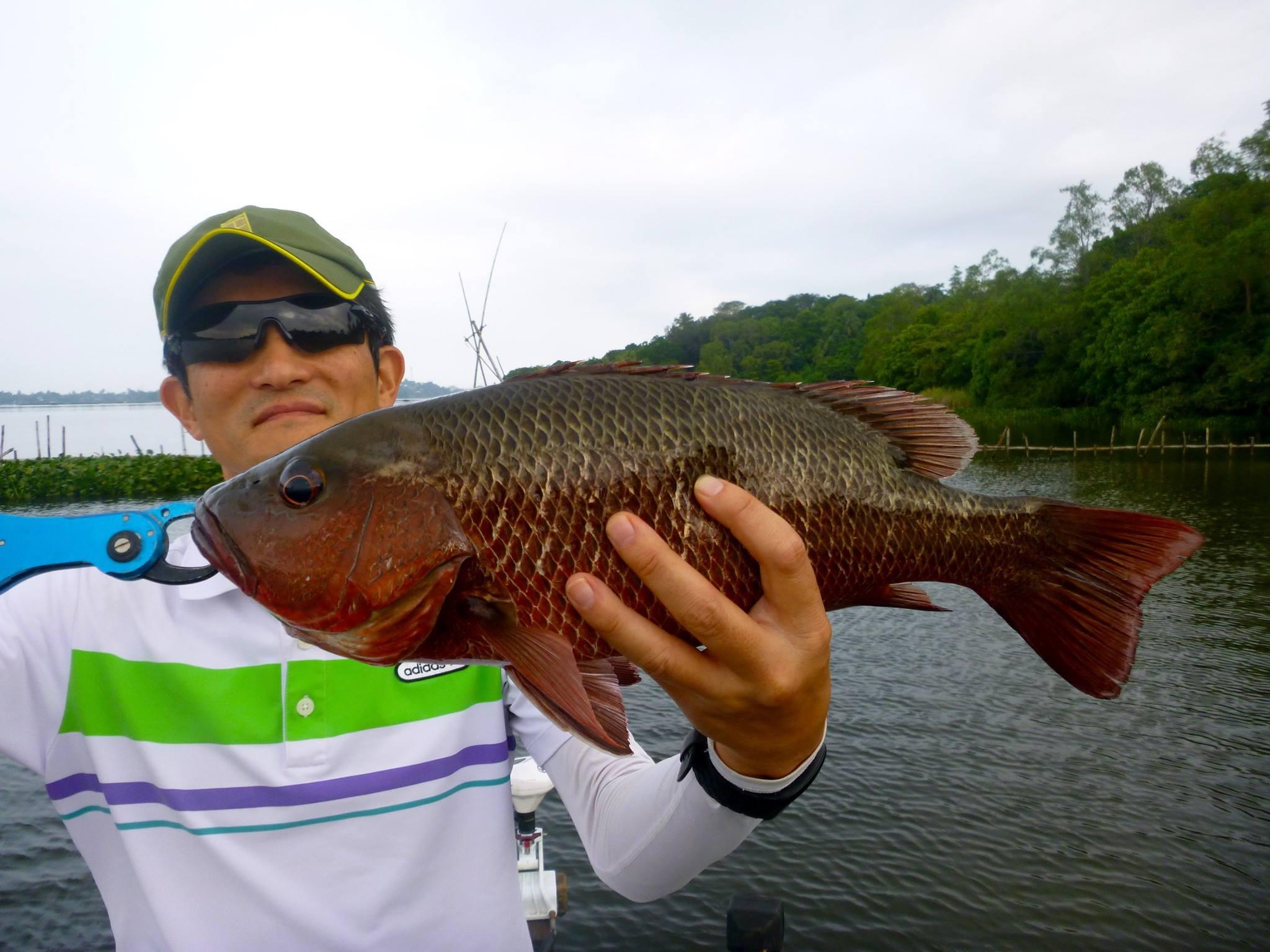 Fishing at Bolgoda Lake Mangrove Jack.jpg
