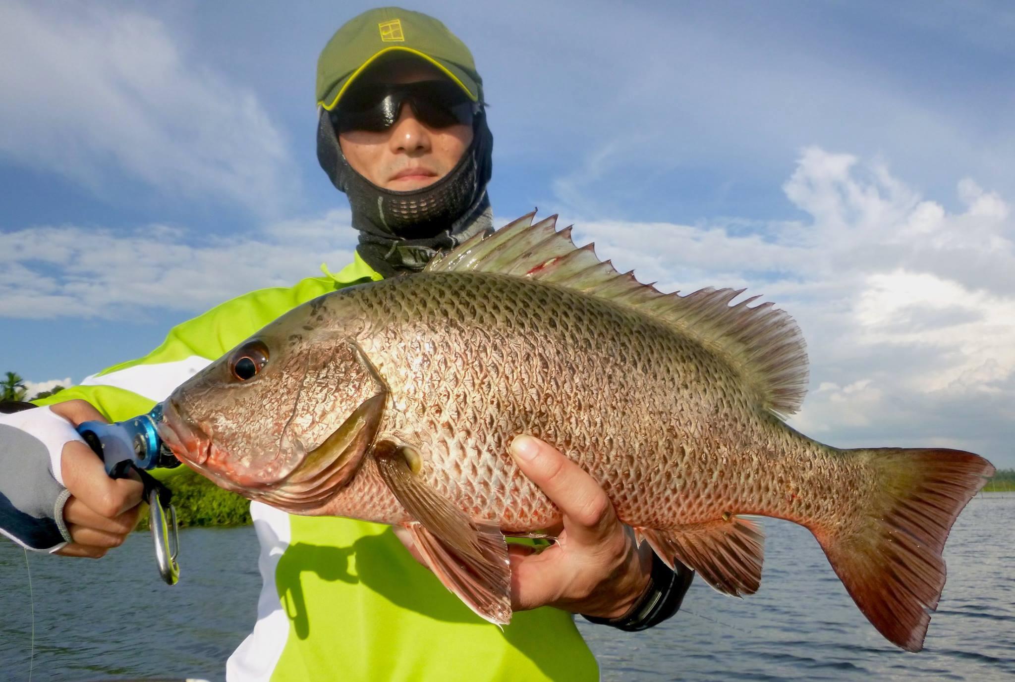 Mangrove Jack Sportfishing Lanka Bolgoda Lake.jpg