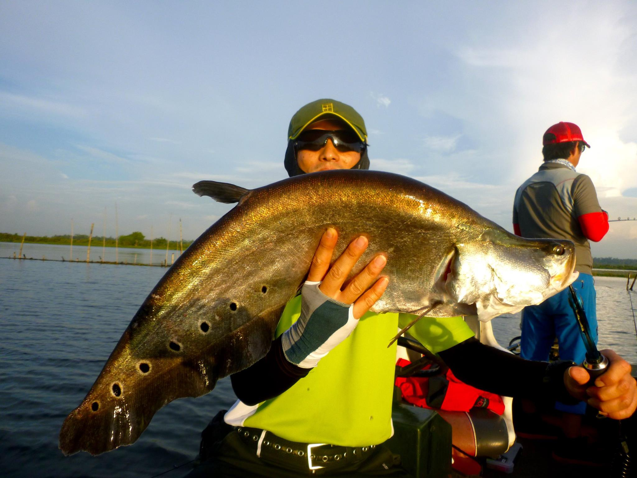 Featherback Bolgoda Lake Fishing Sri Lanka.jpg