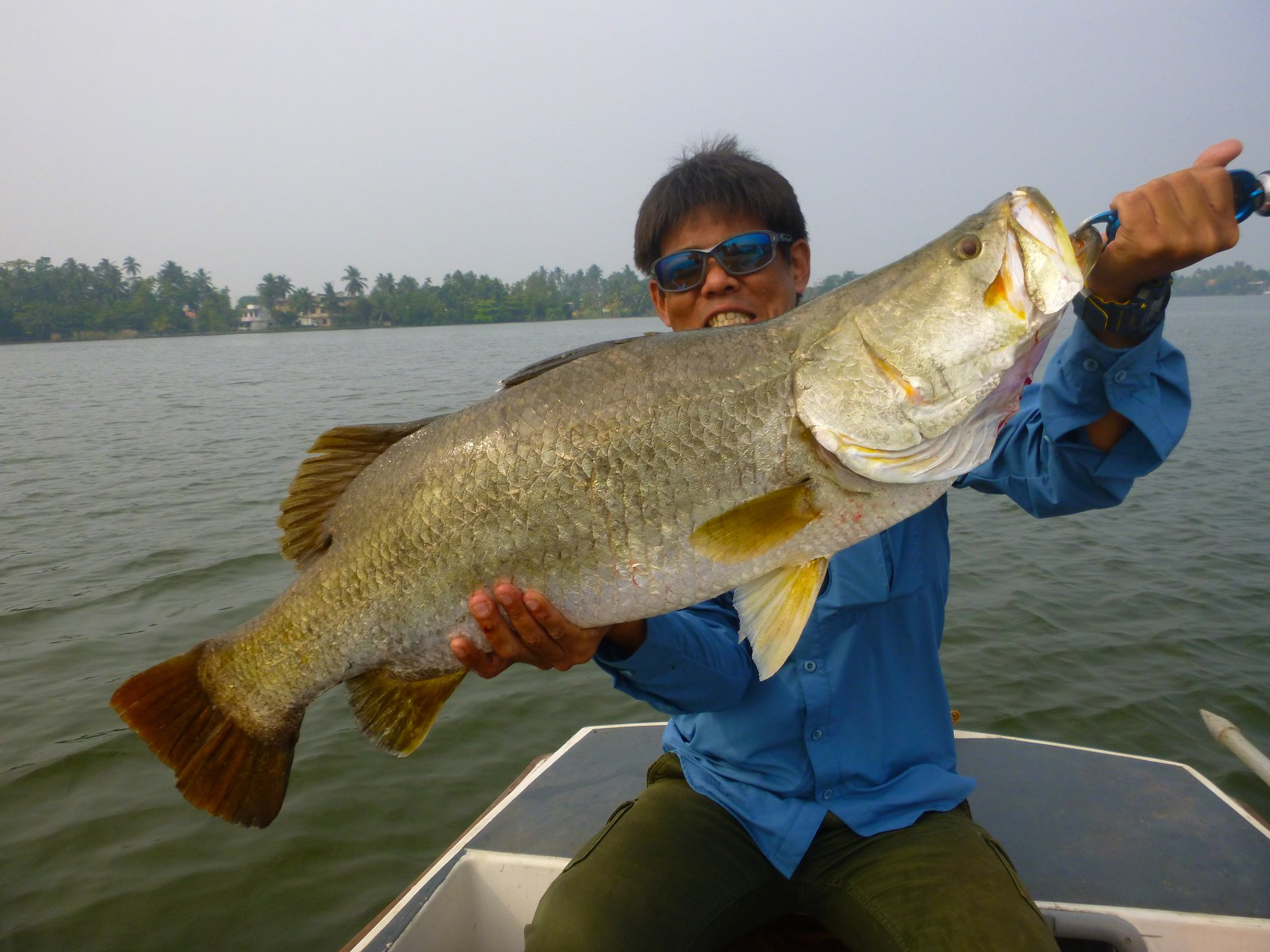 Big Barramundi sri lanka Bolgoda Lake fishing.jpg