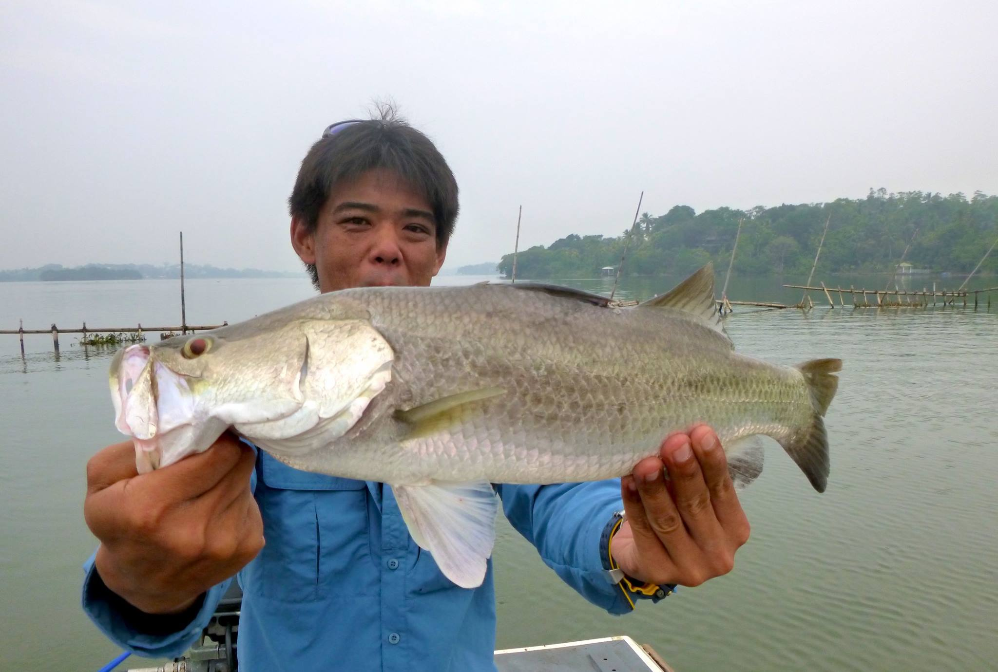 Barramundi fishing Bolgoda Lake sri lanka.jpg