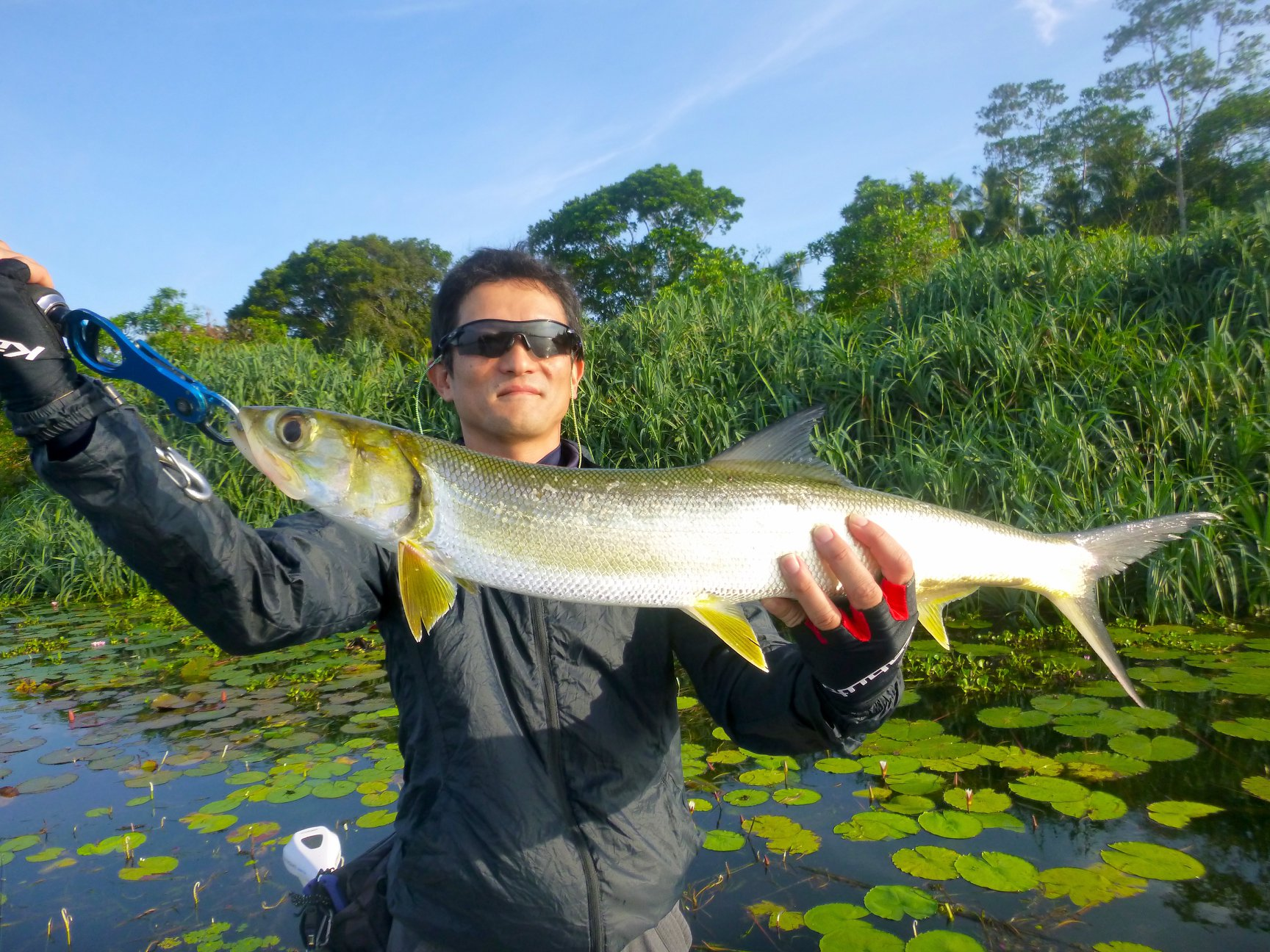 Casting lures in Bolgoda Lake Sri Lanka Ladyfish.jpg