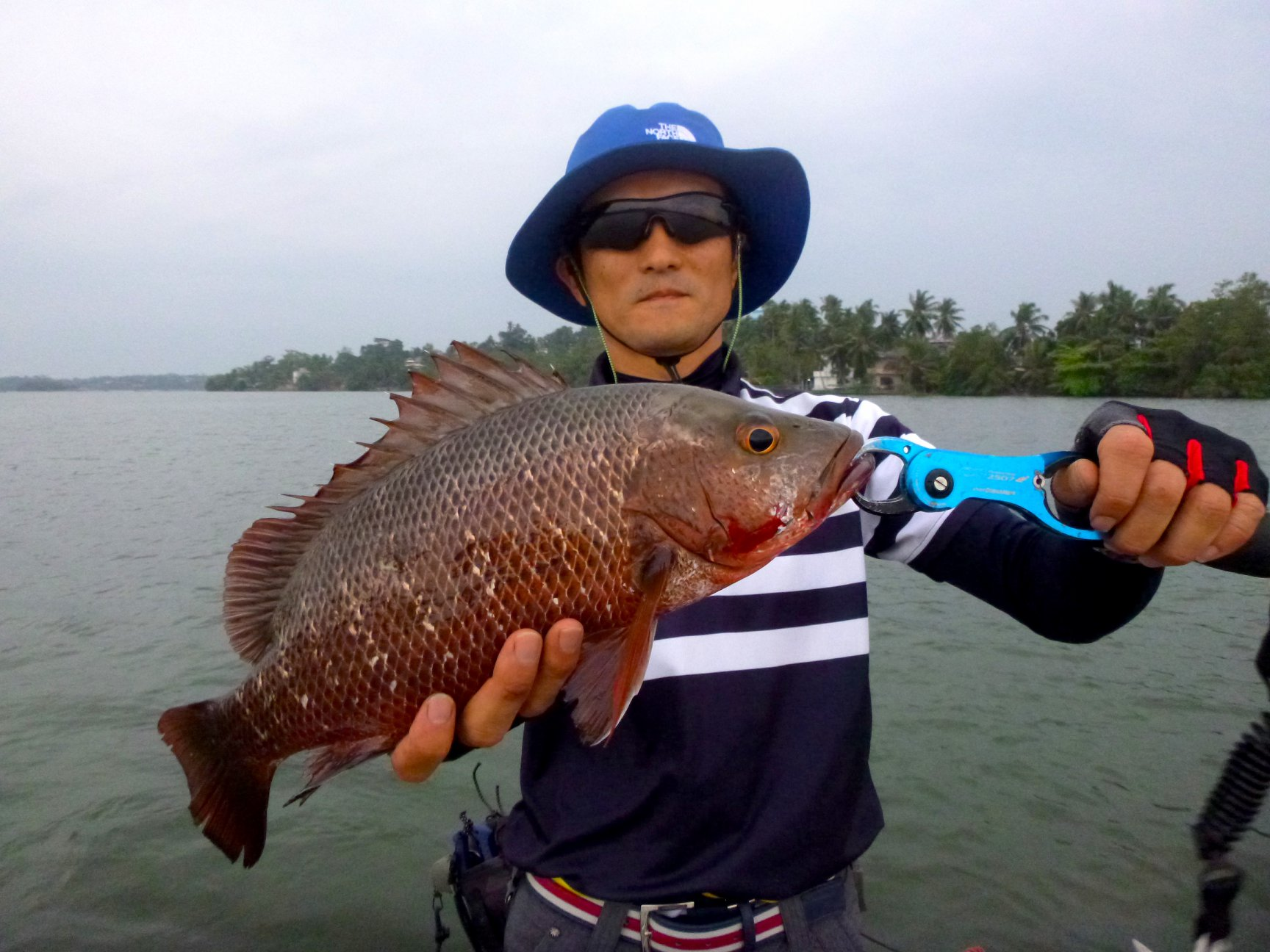 Lure fihing Sri Lanka Mangrove Jack MJ.jpg