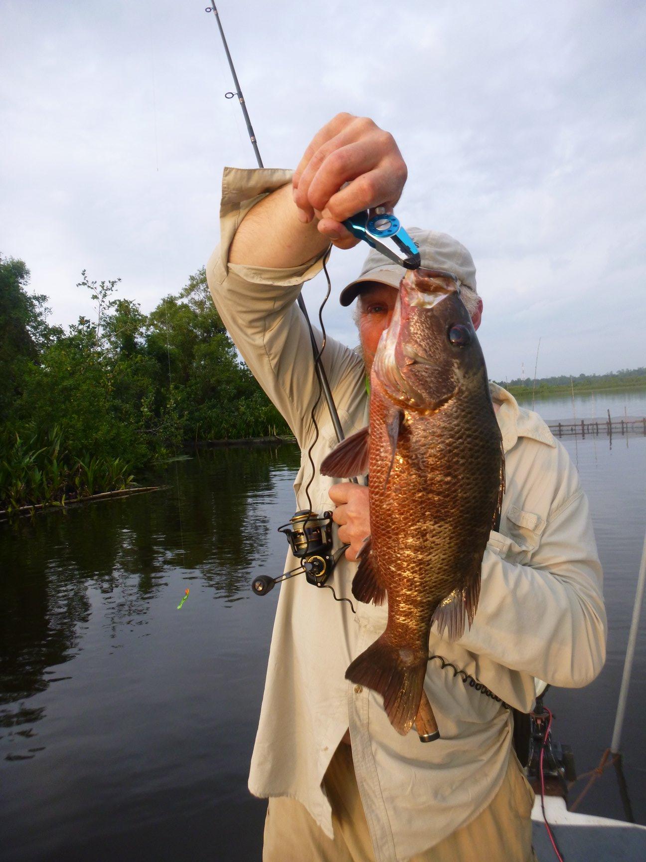 Mangrove Jack Sri Lanka Bolgoda Lake.jpg