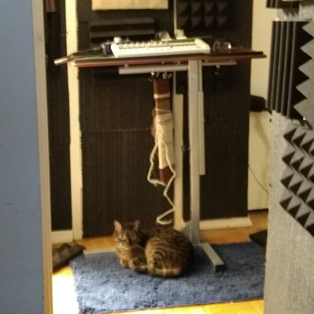 Podcast cat!