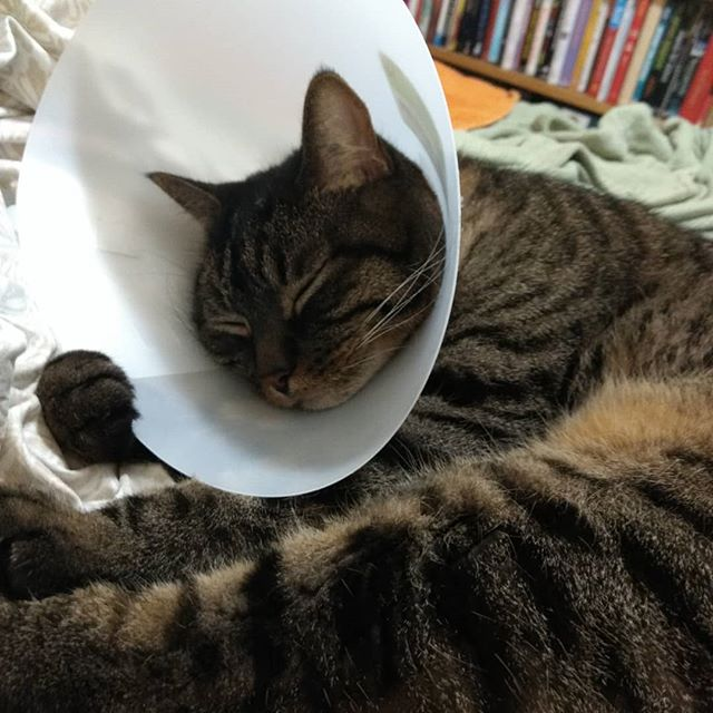 The paw on the edge of the cone is killing me.