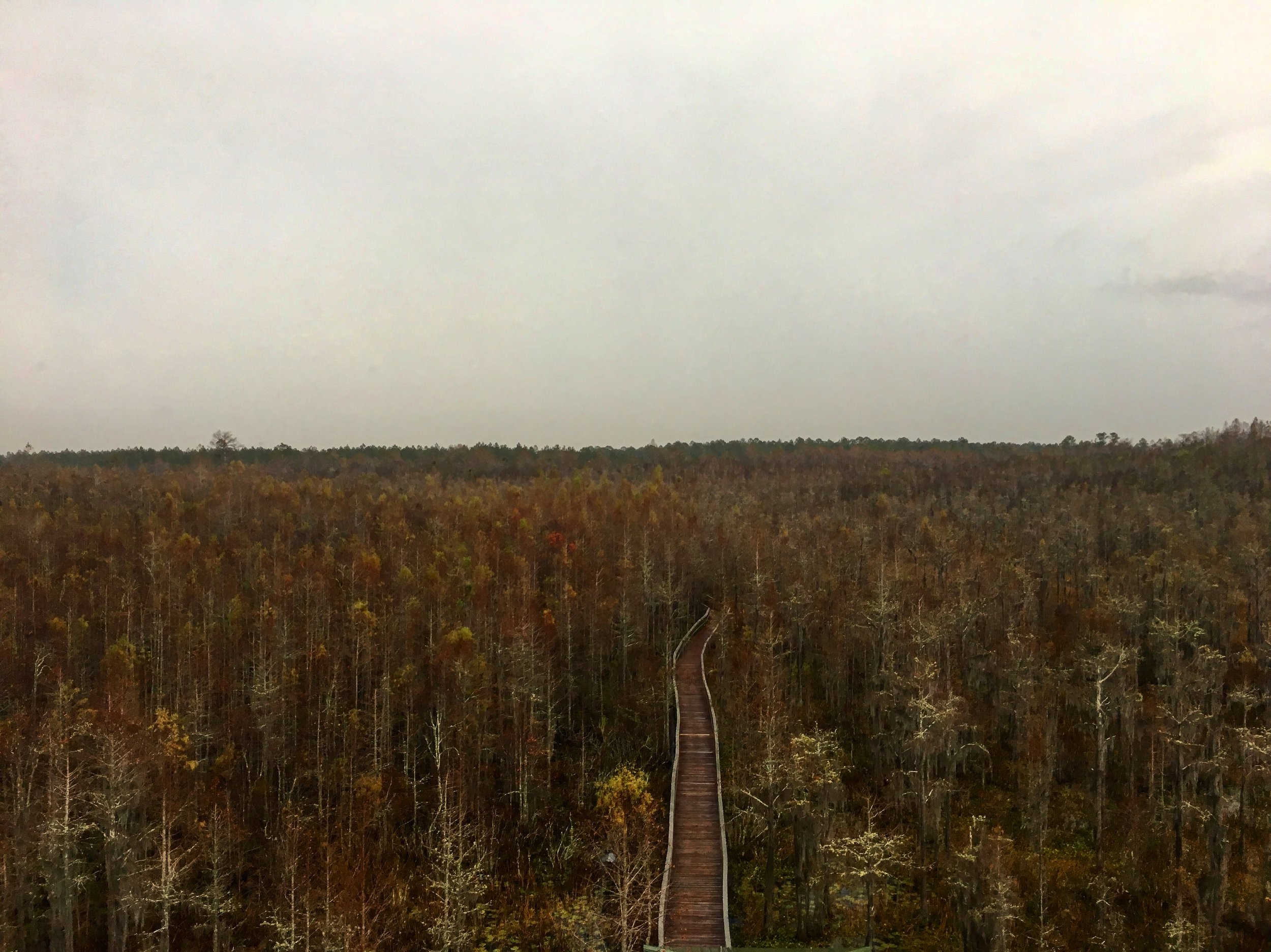 View from on top of the Fire Tower