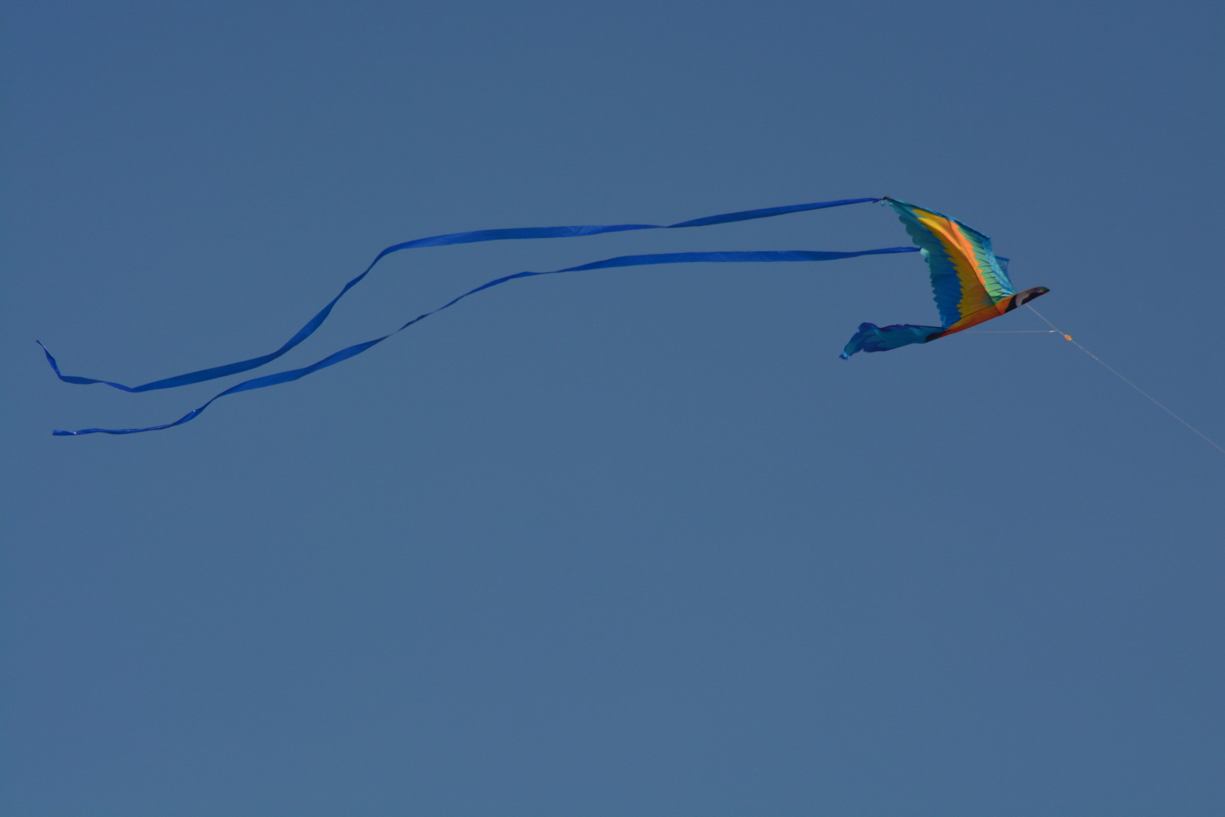 Boardwalk Kite