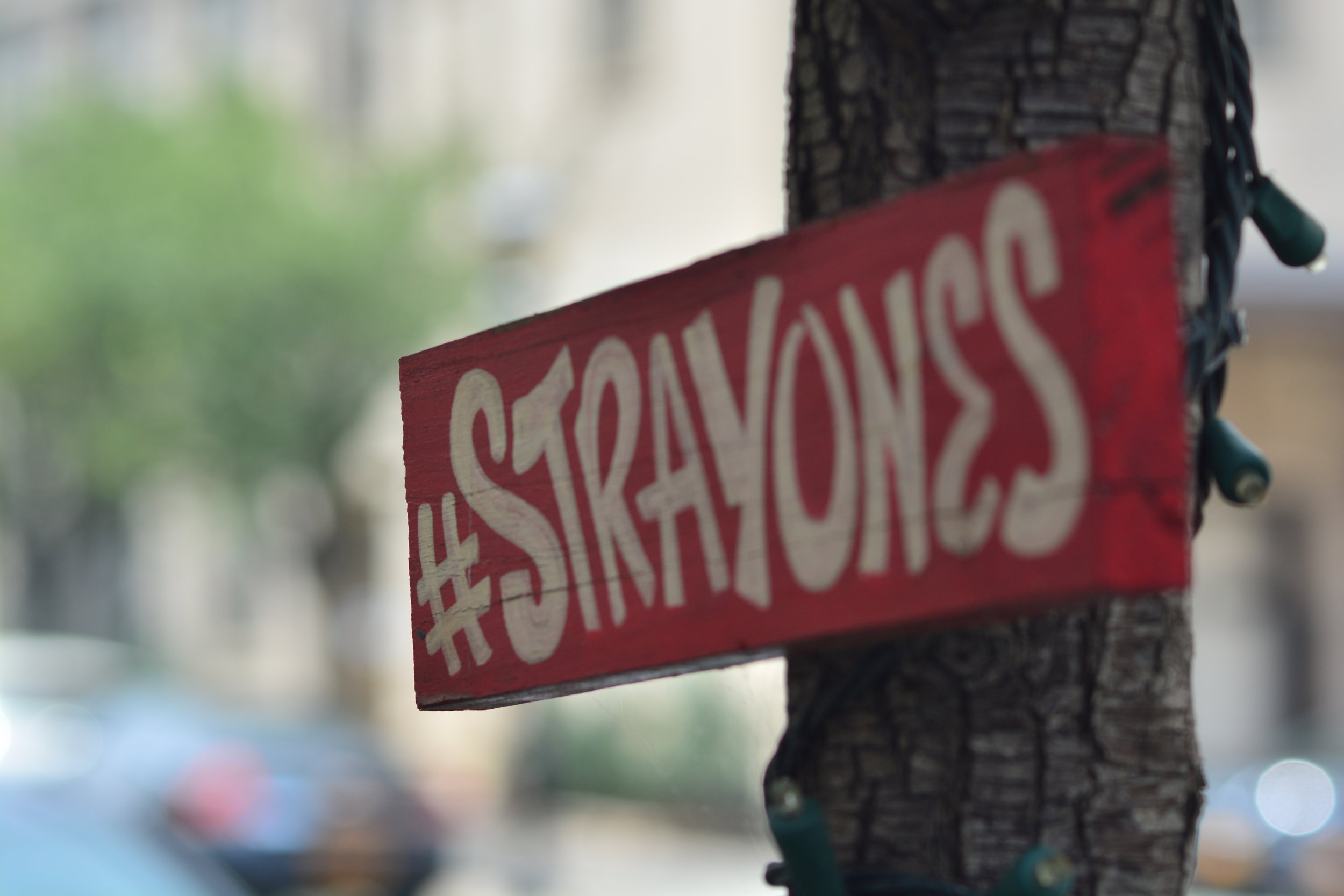 Try to Find More #StrayOnes