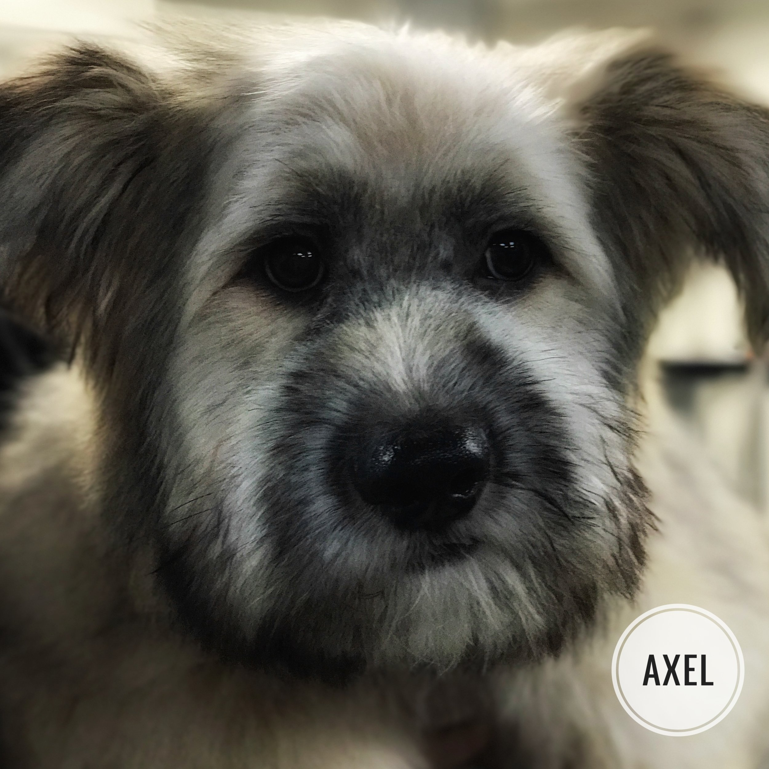 Rescue Dog Incentive — Zoom Groom Groom