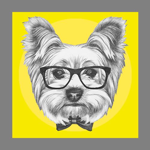 Dog-Grooming-Regina7.png