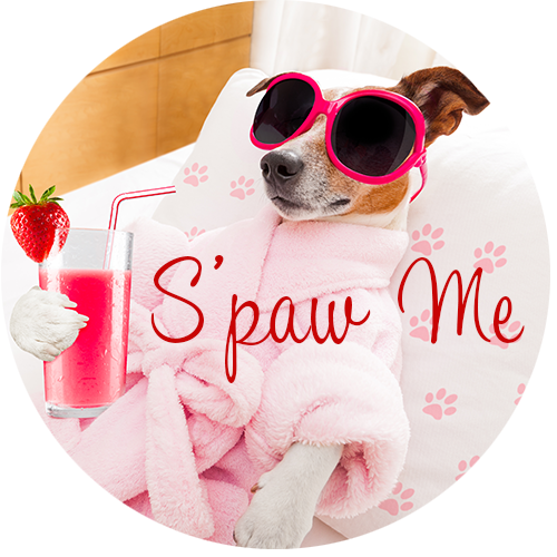 Spa Services For Dogs and Cats