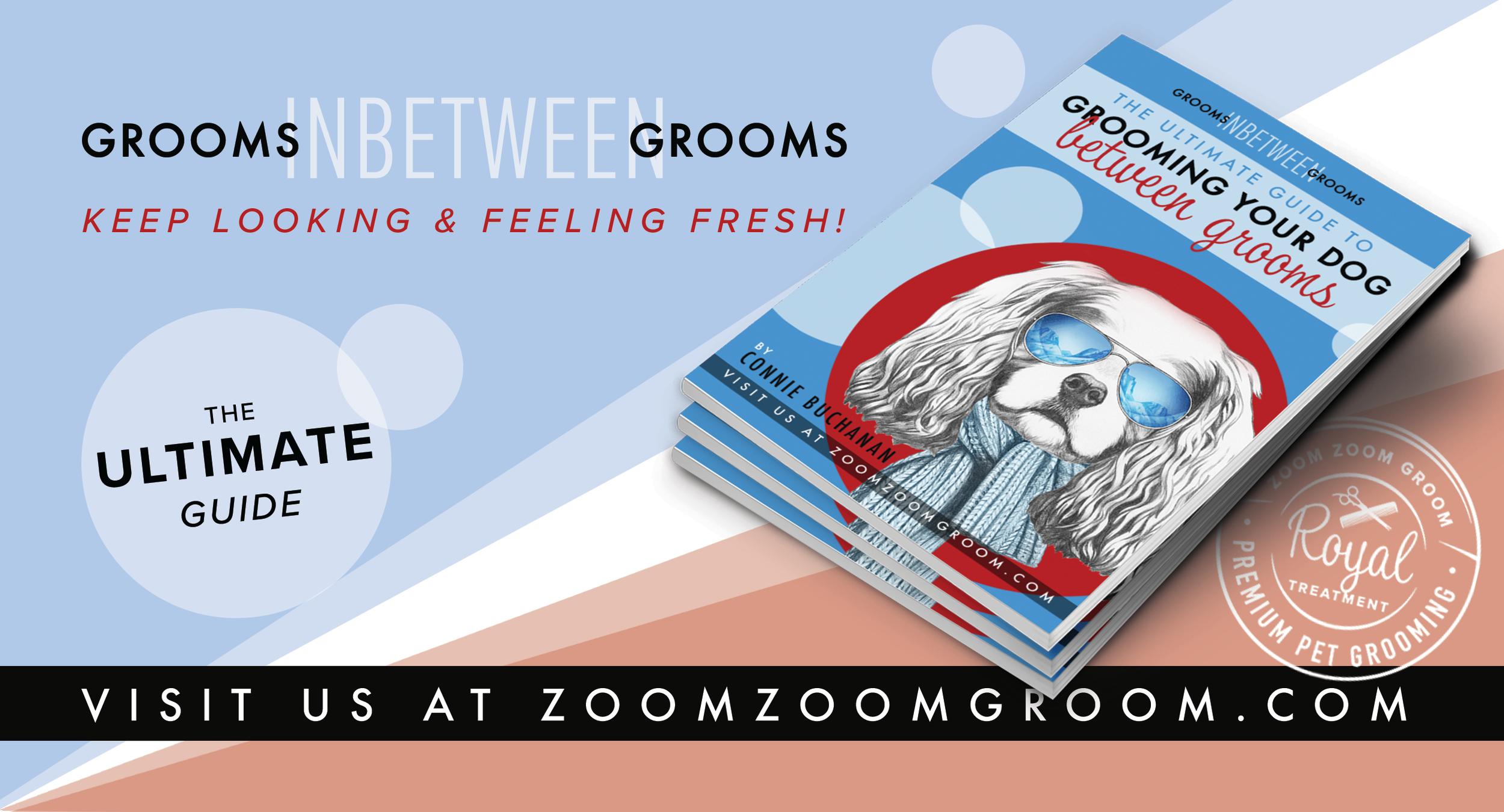 Grooming Your Pet Between FGooms