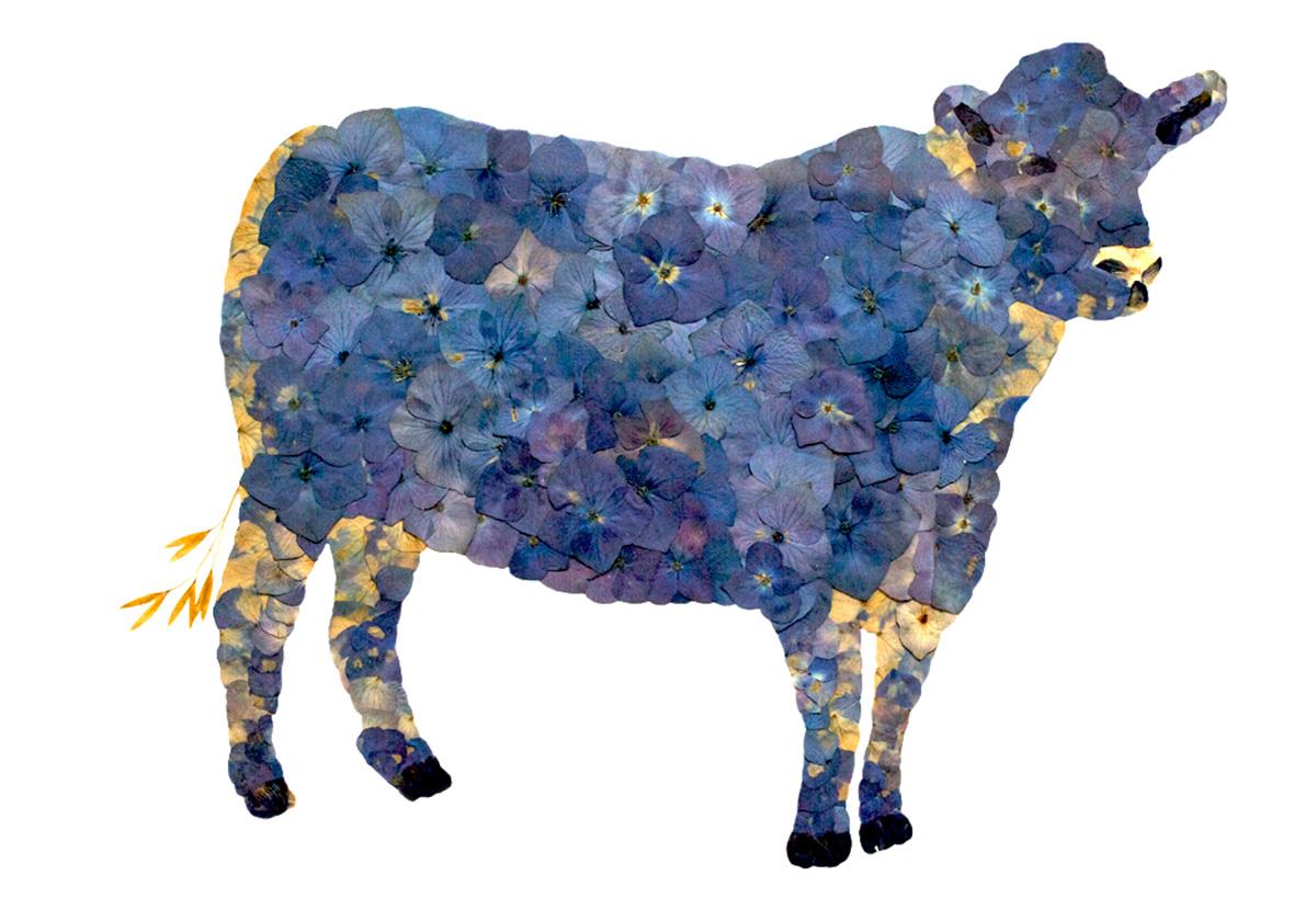"""""""Blue Cow"""""""