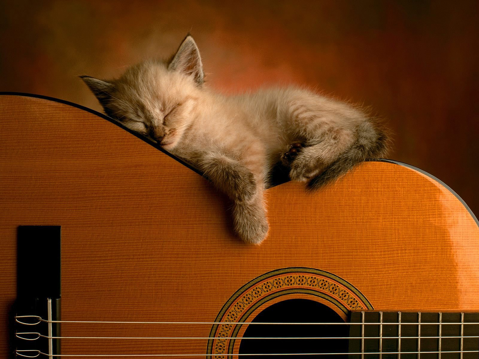Guitar_0031.jpg