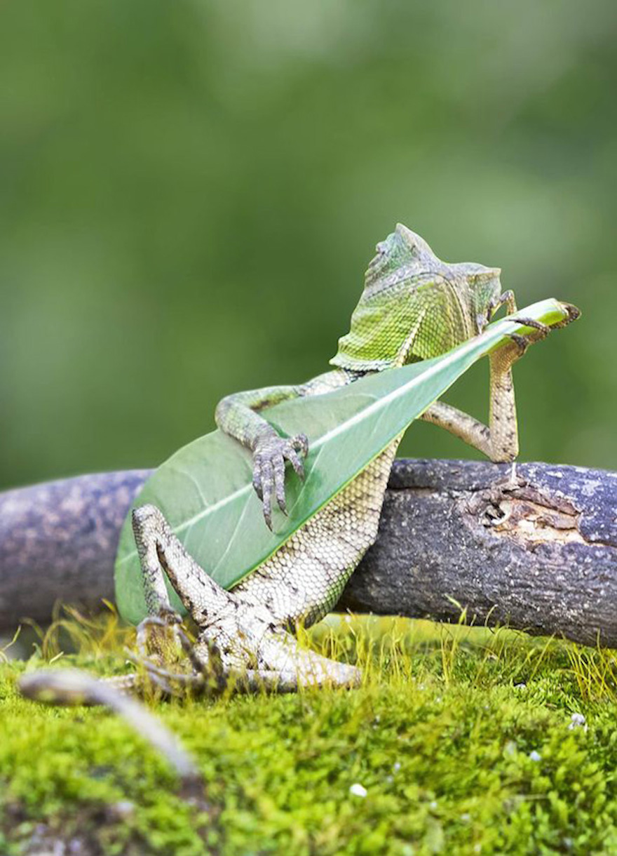 Guitar_0033.jpg