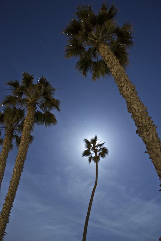 00_07_CA_San Clemente Palms.jpg